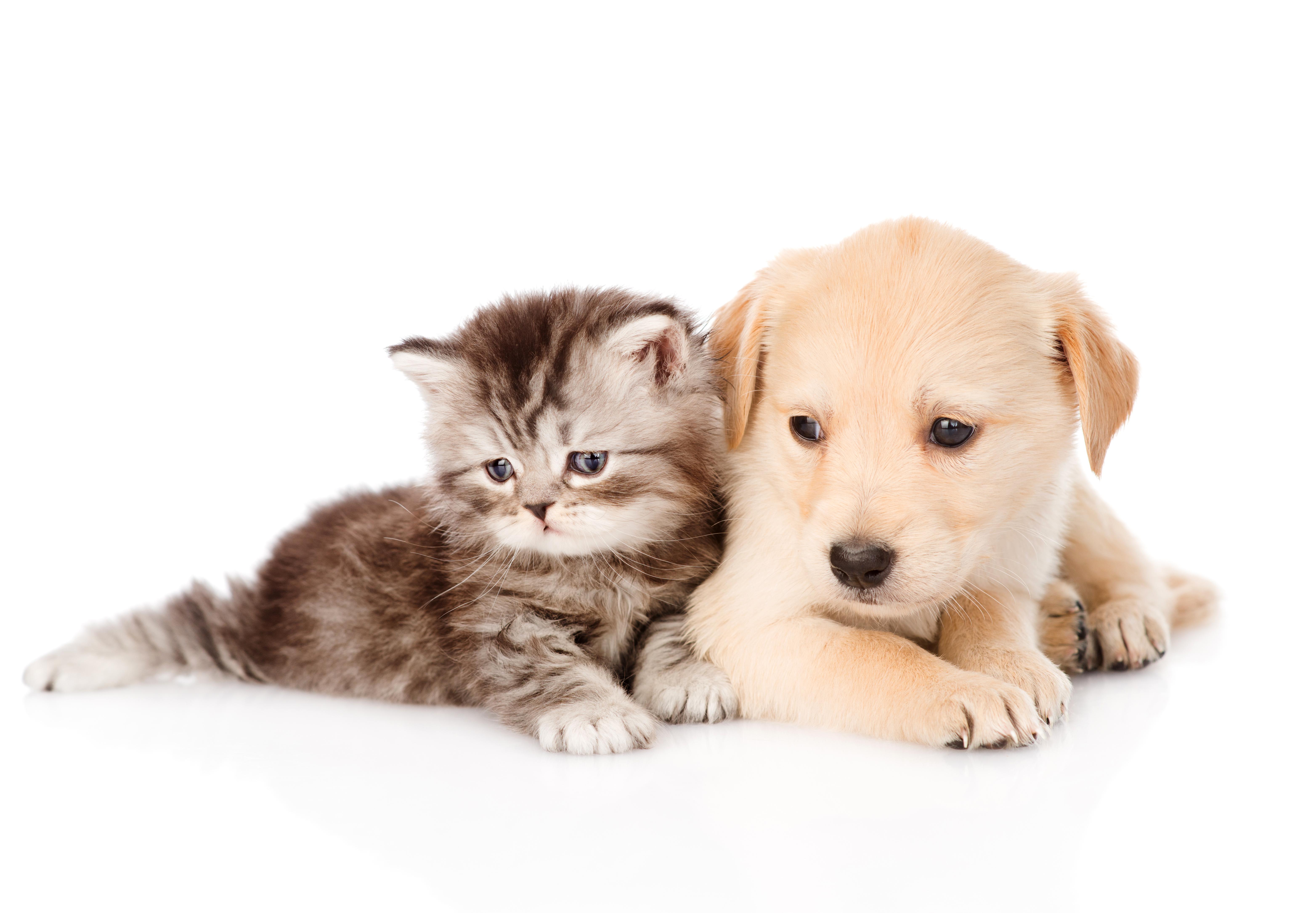 Друзья кот с собакой скачать