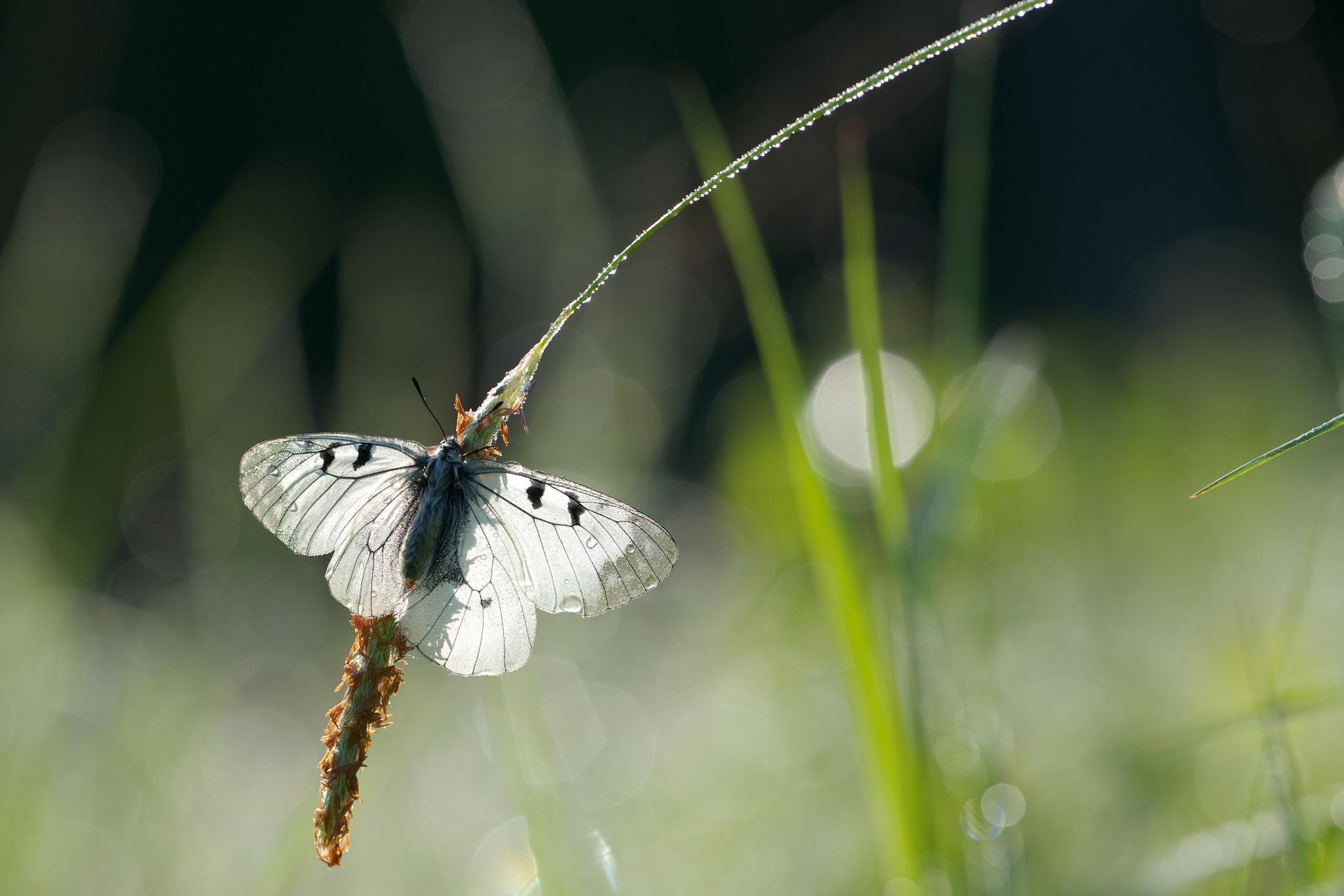 природа бабочка цветы животные насекомые роса скачать