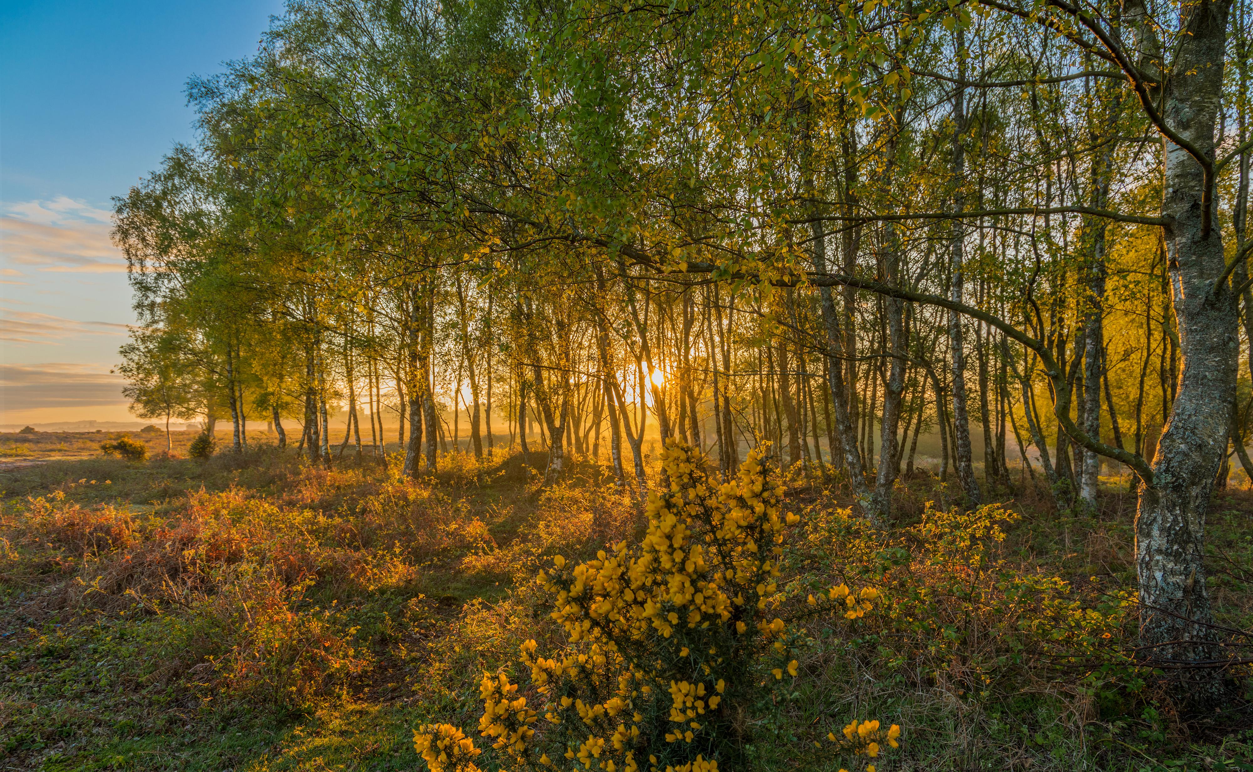 Картинки Англия Rockford New Forest National Park Природа осенние Парки Деревья 4000x2465 Осень