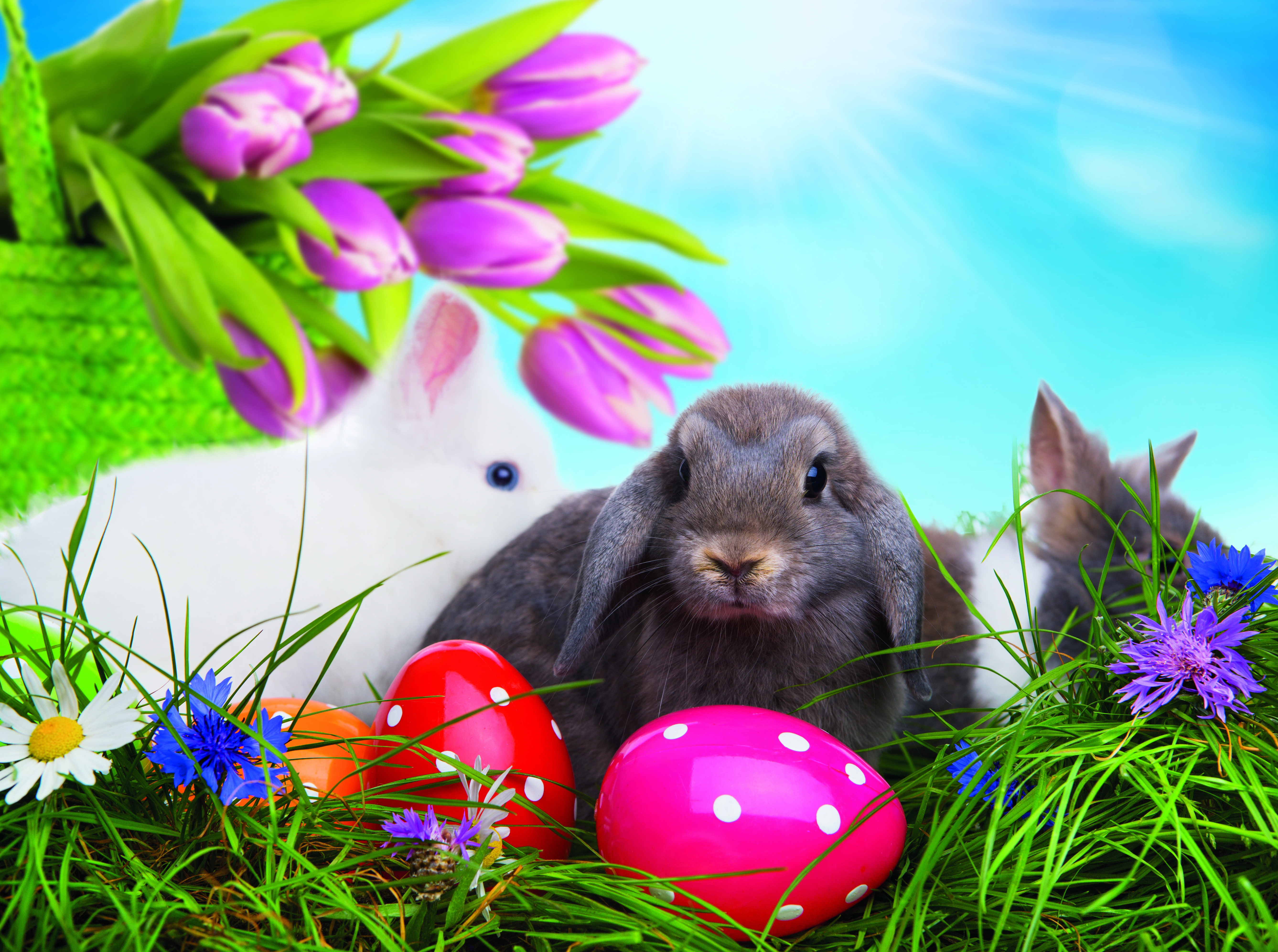 100 Happy Easter Images 2017 Bunny Wallpapers and