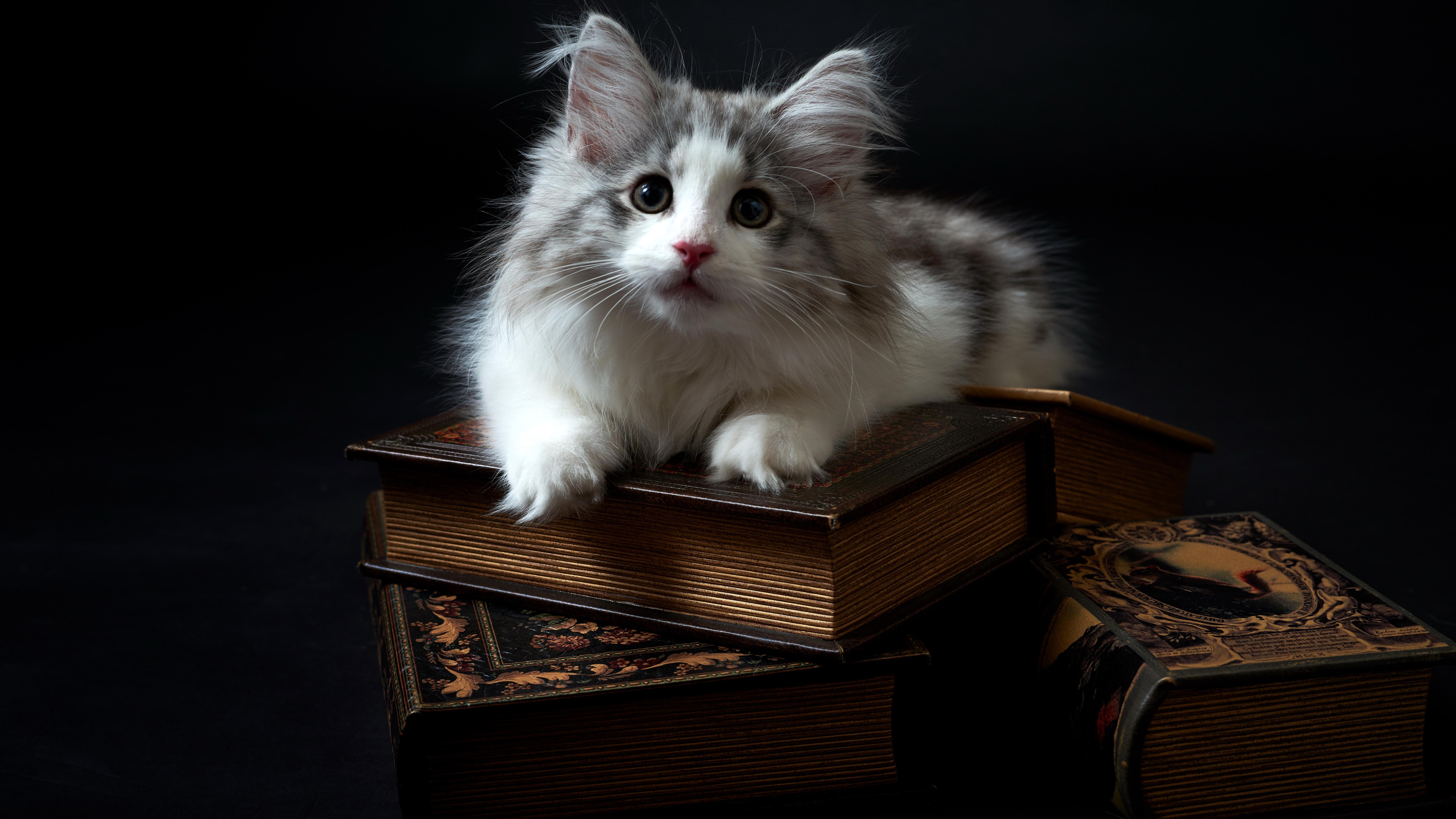 Котенок с книгой загрузить