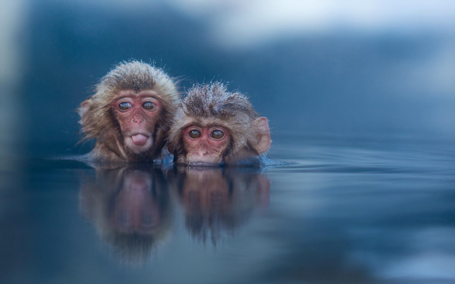 Фотографии обезьяна Двое воде смотрят Животные Обезьяны 2 два две вдвоем Вода Взгляд смотрит животное