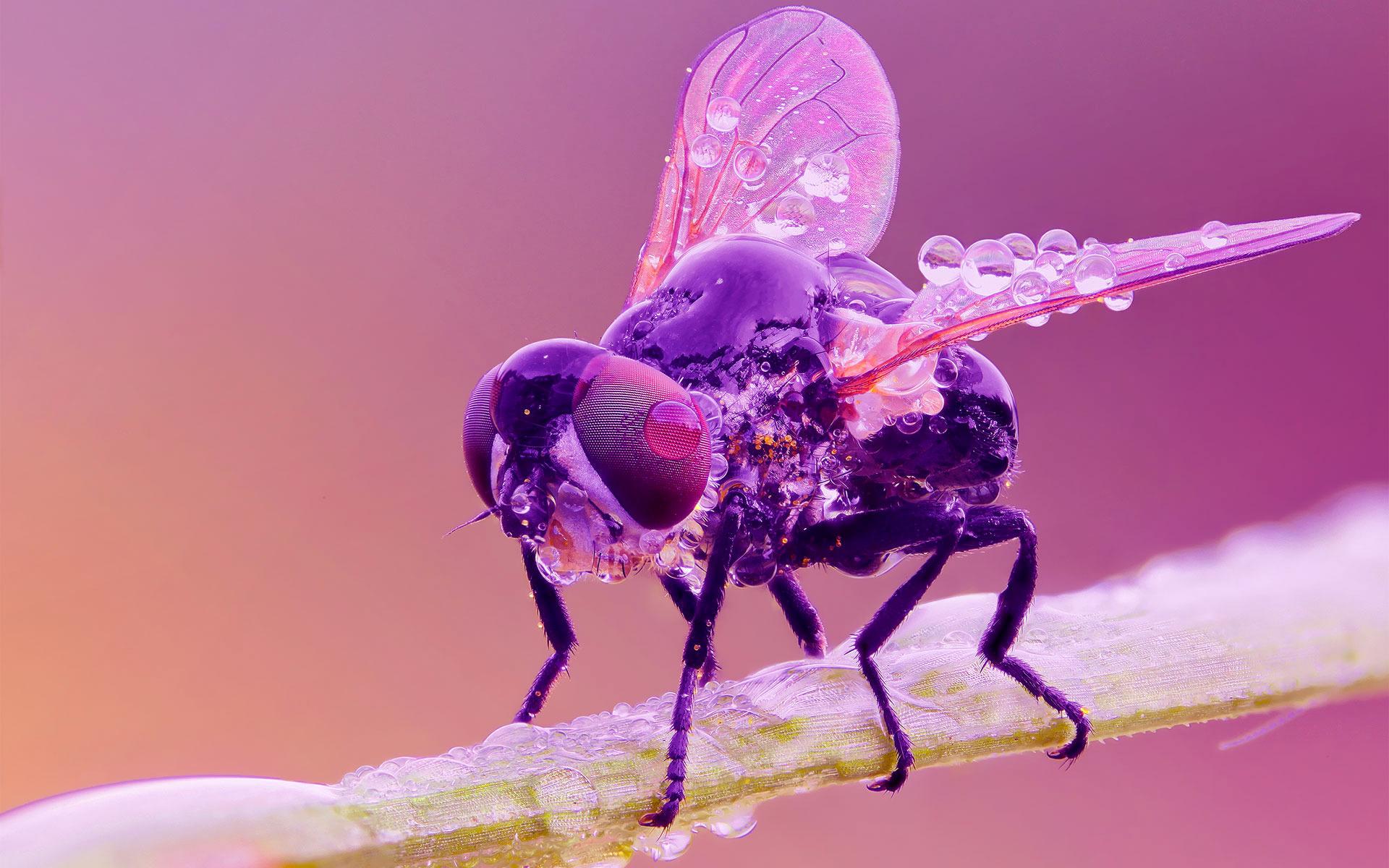 Механическая муха без смс