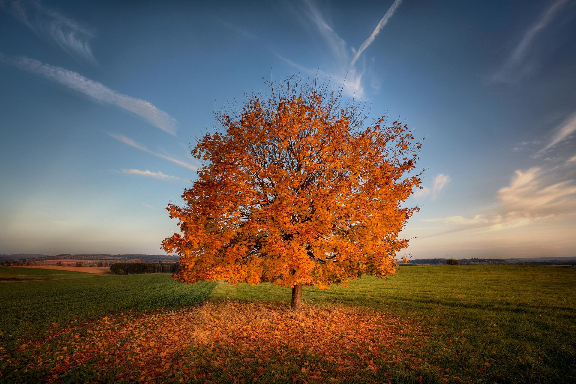 поле дерево желтое без смс