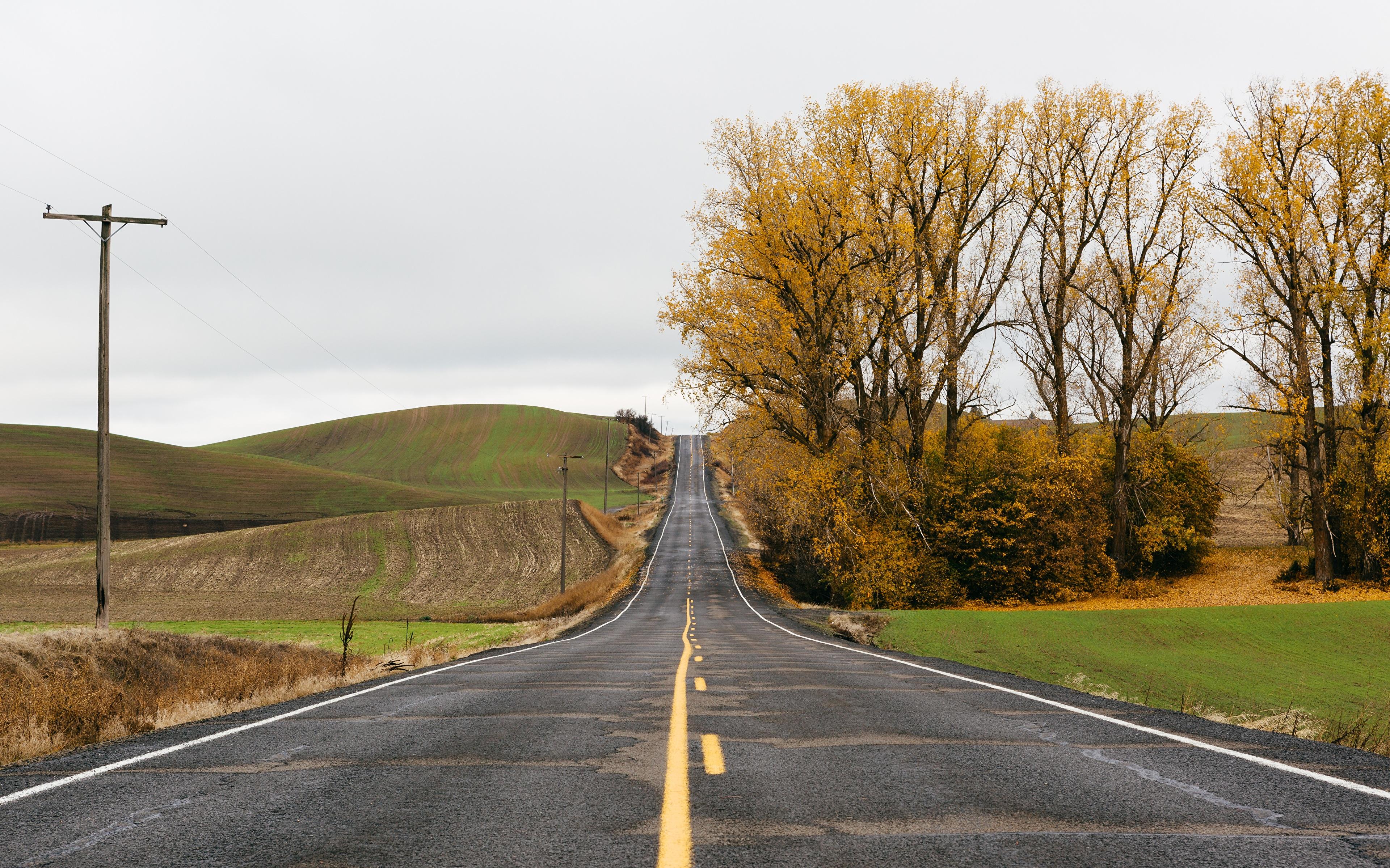 Фотография осенние Природа Холмы Дороги асфальта деревьев Осень холм холмов Асфальт дерево дерева Деревья