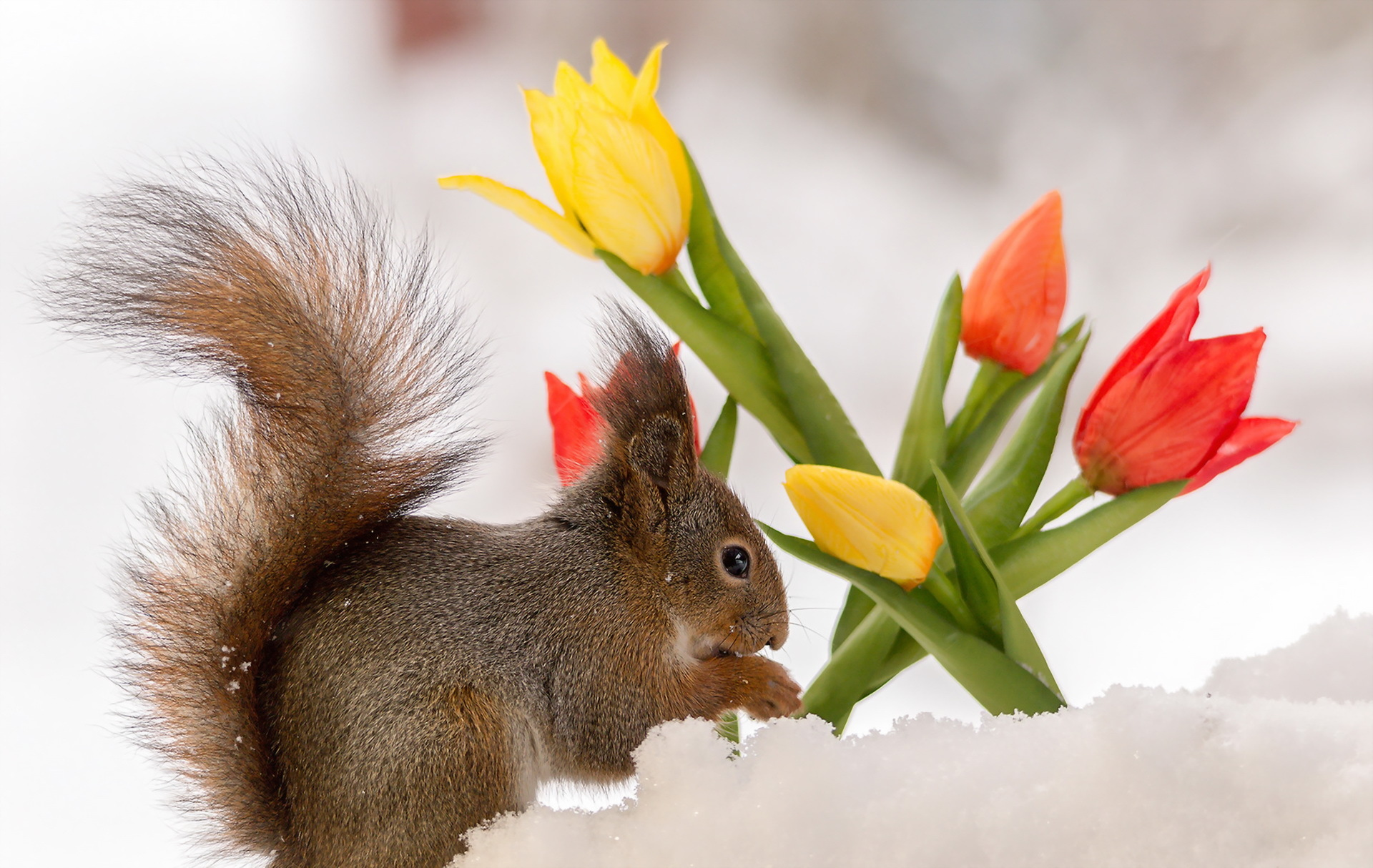 белка, цветы, синие, листья бесплатно