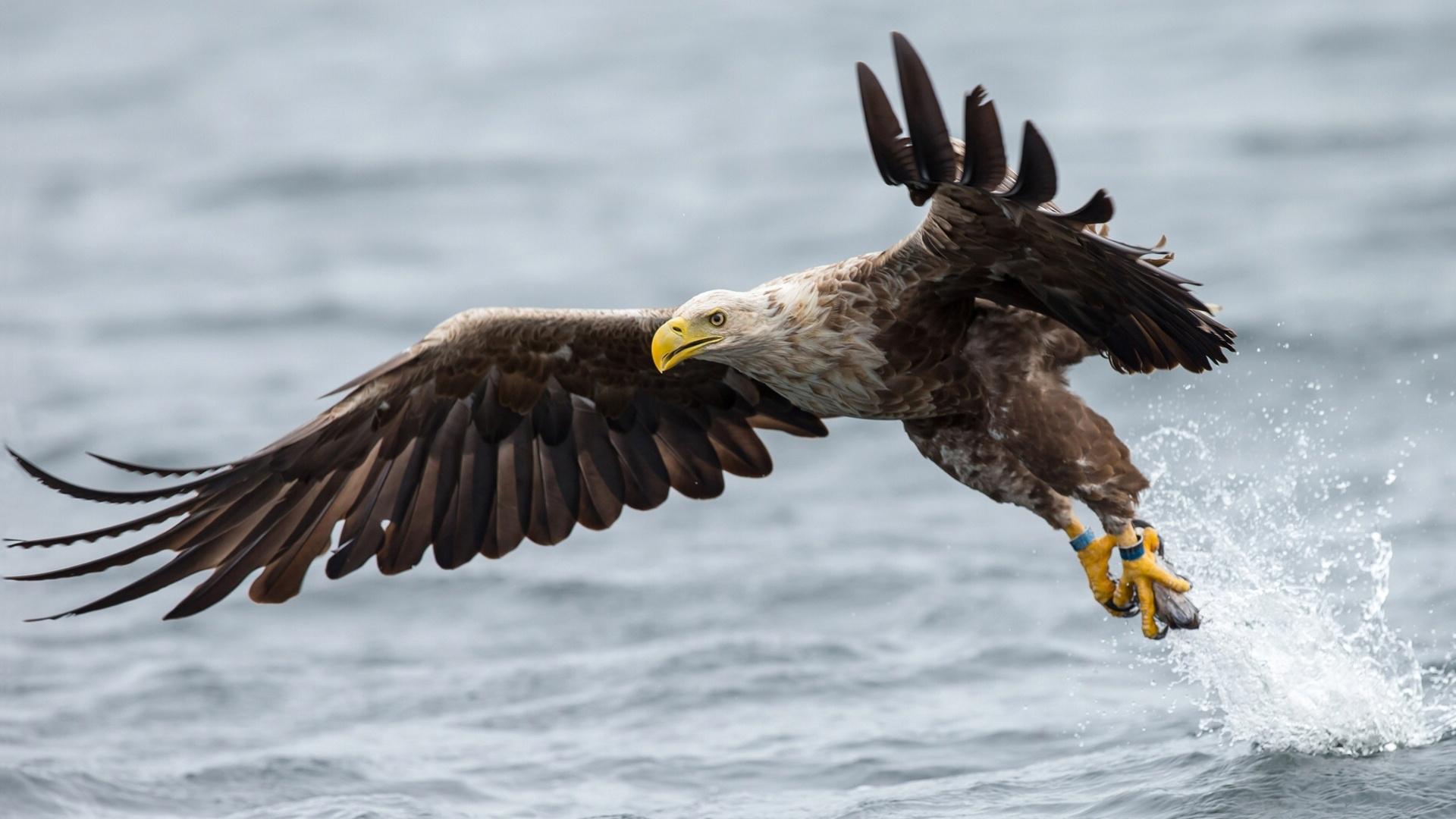 орел полет вода без смс