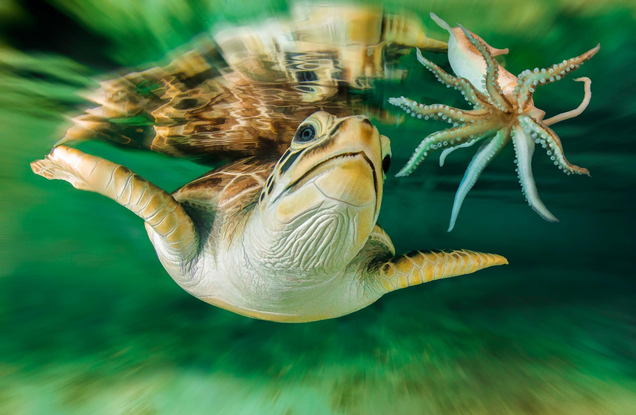 черепаха с акулой скачать