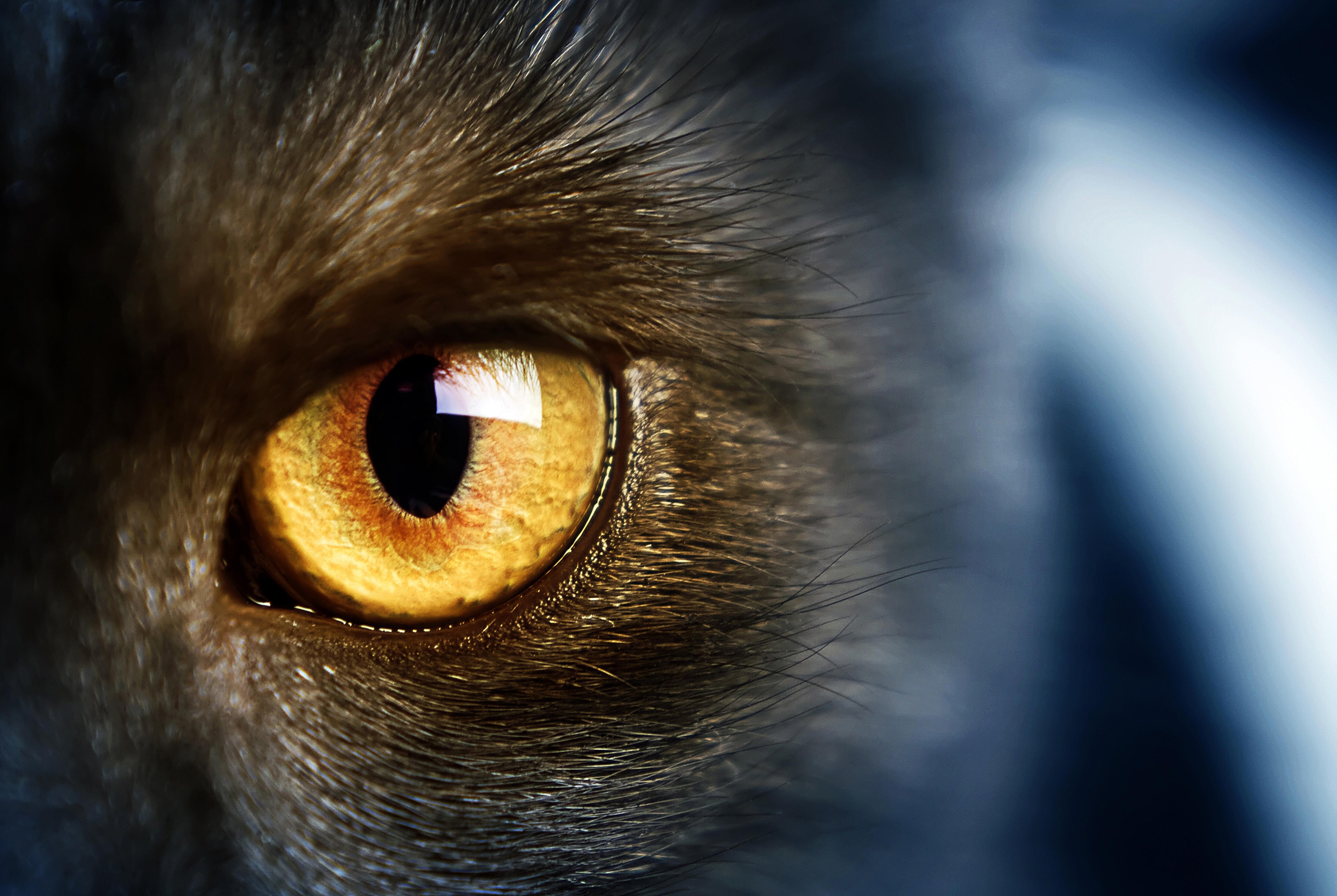 кот глаза стол без смс