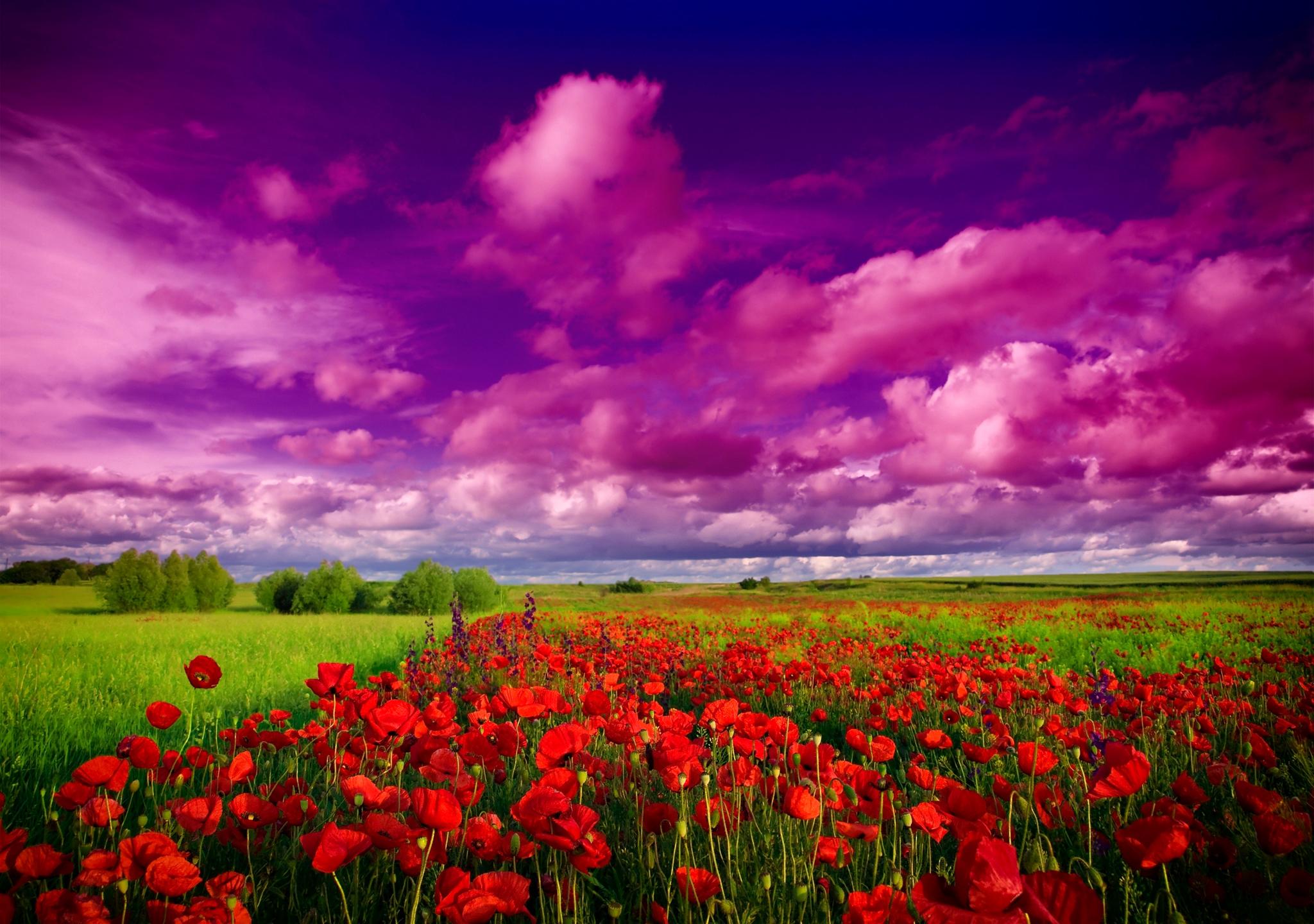природа на телефон цветы фото