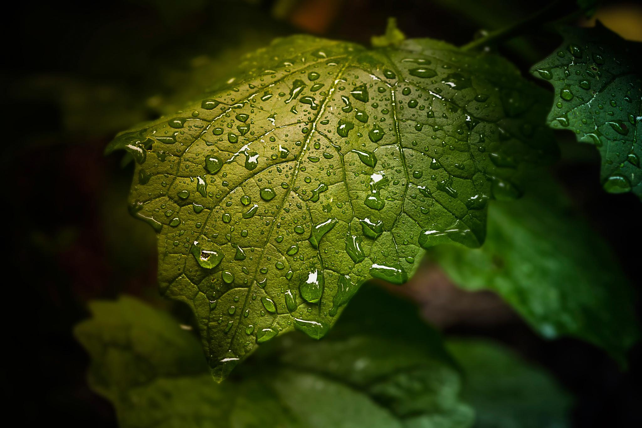 природа листья капли вода без смс
