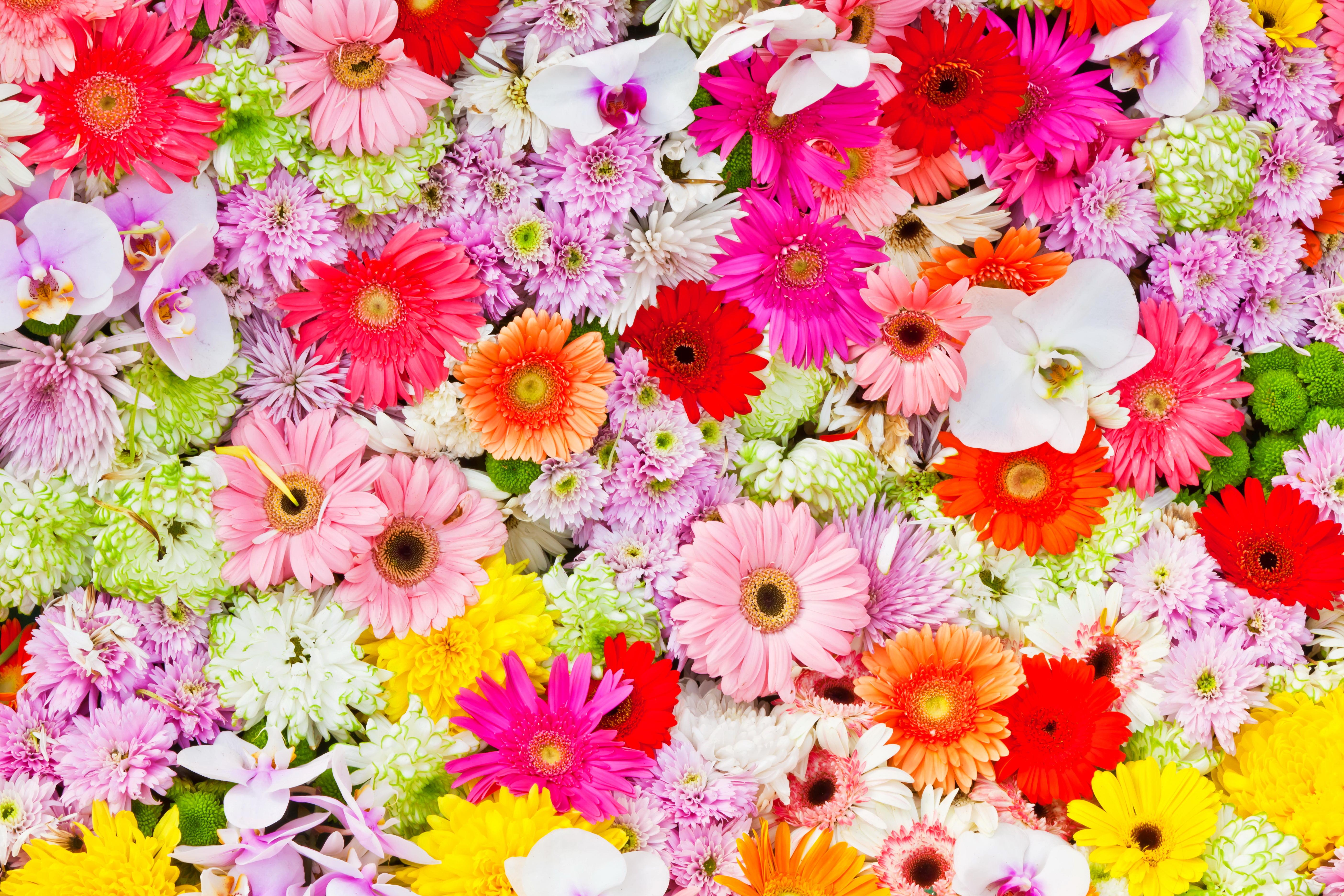 Осенние цветы в саду 65 Фото с названиями  HappyModern