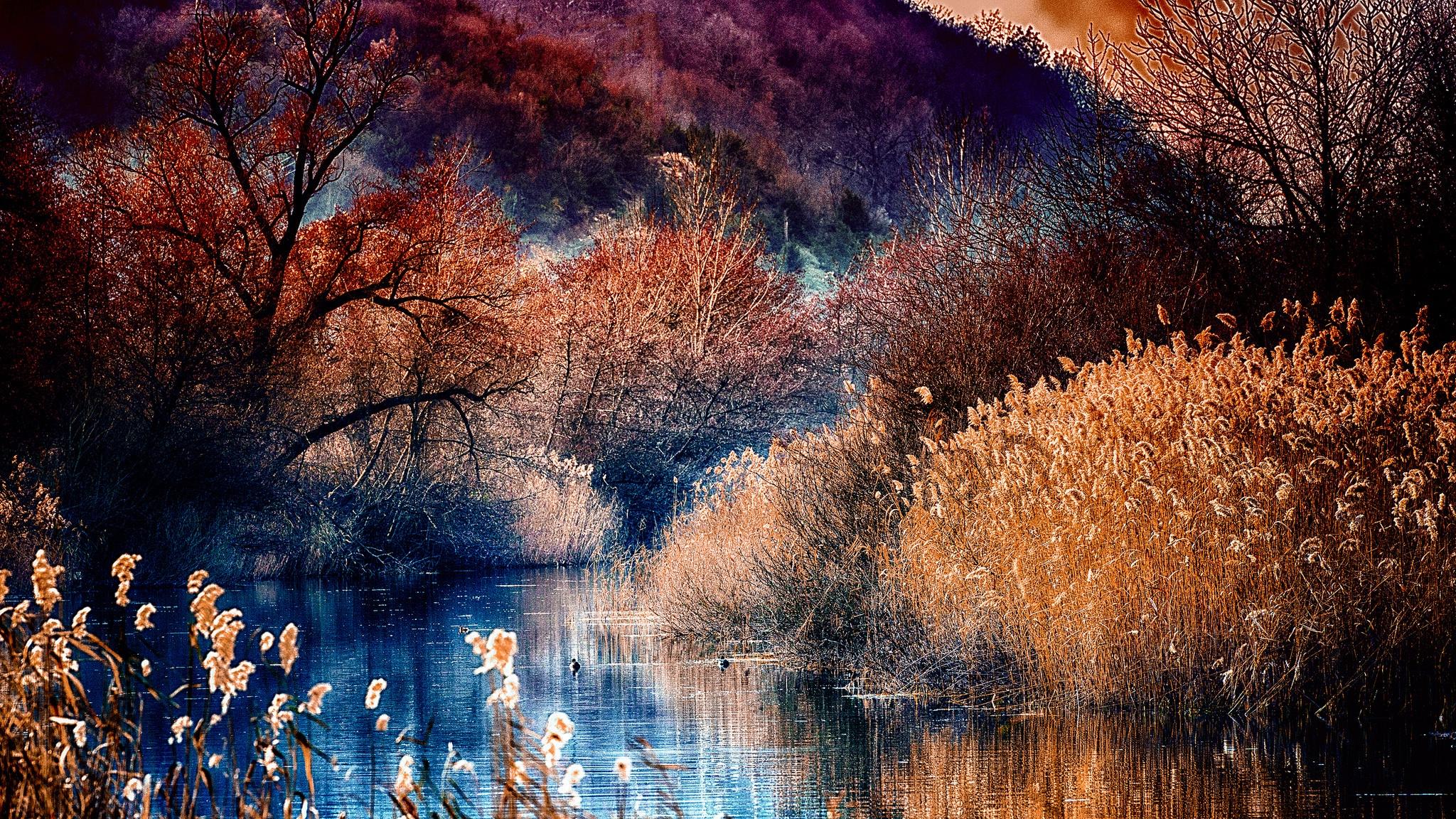 осенние деревья на воде подборки