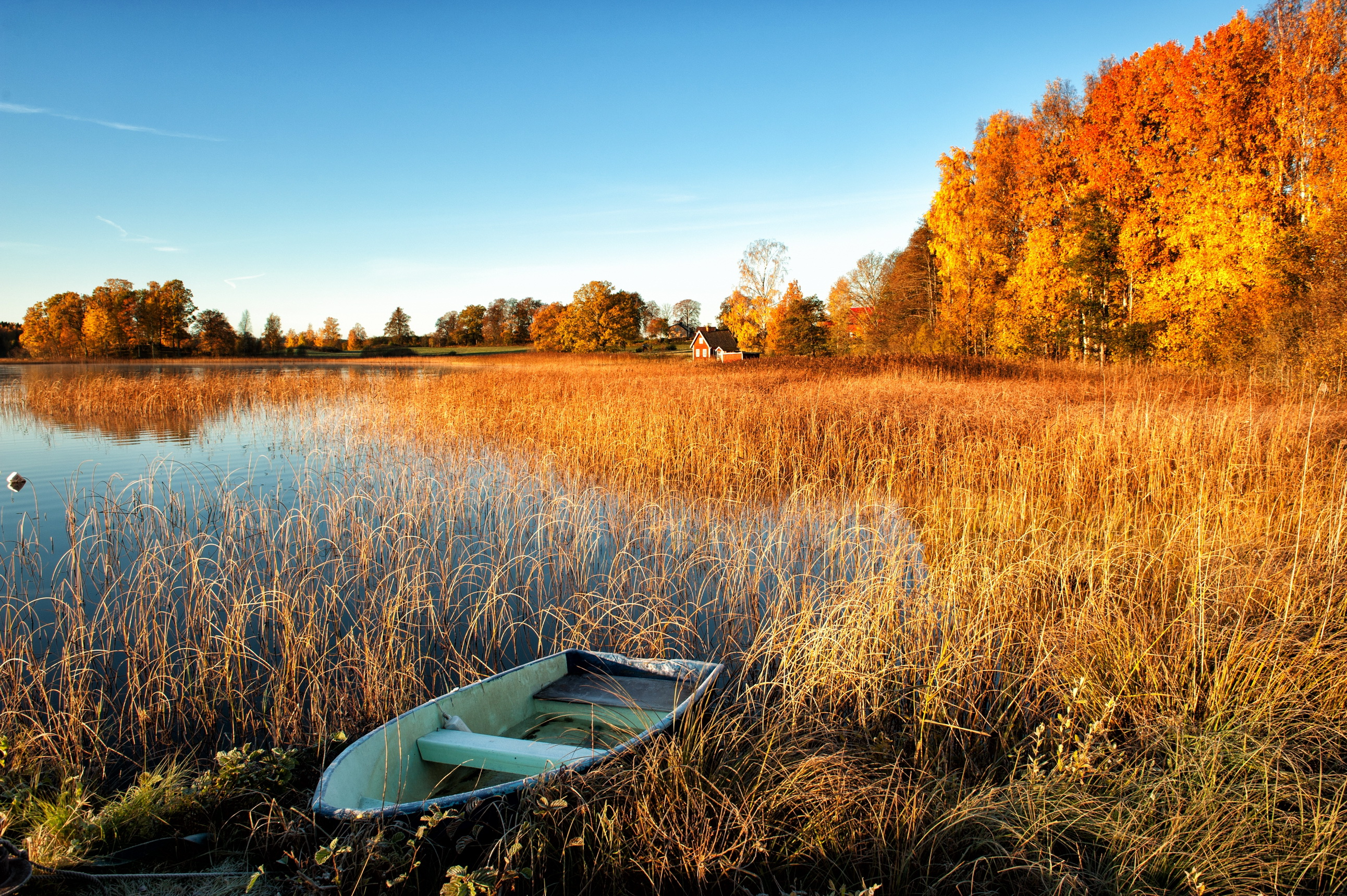 природа оранжевый автомобиль трава ангар деревья без смс