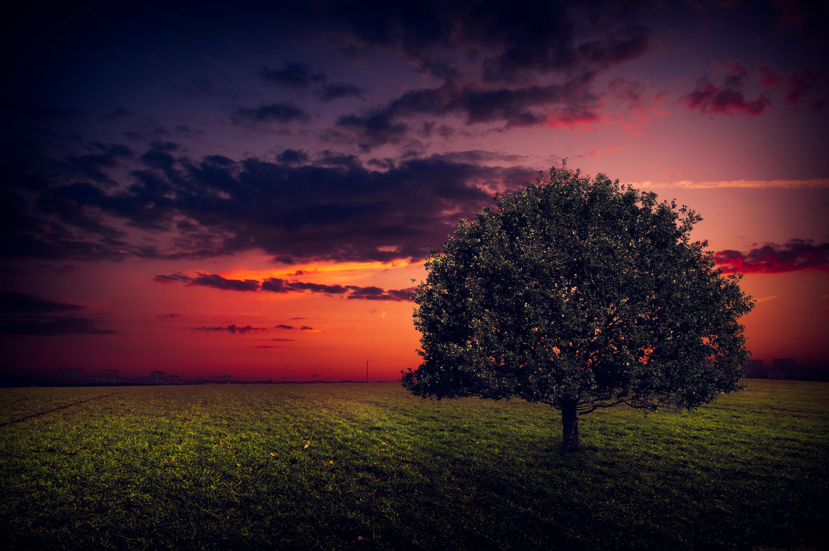 дерево поле небо закат бесплатно