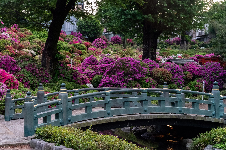 Фото Киото Япония мост Природа Парки Кусты Мосты парк кустов