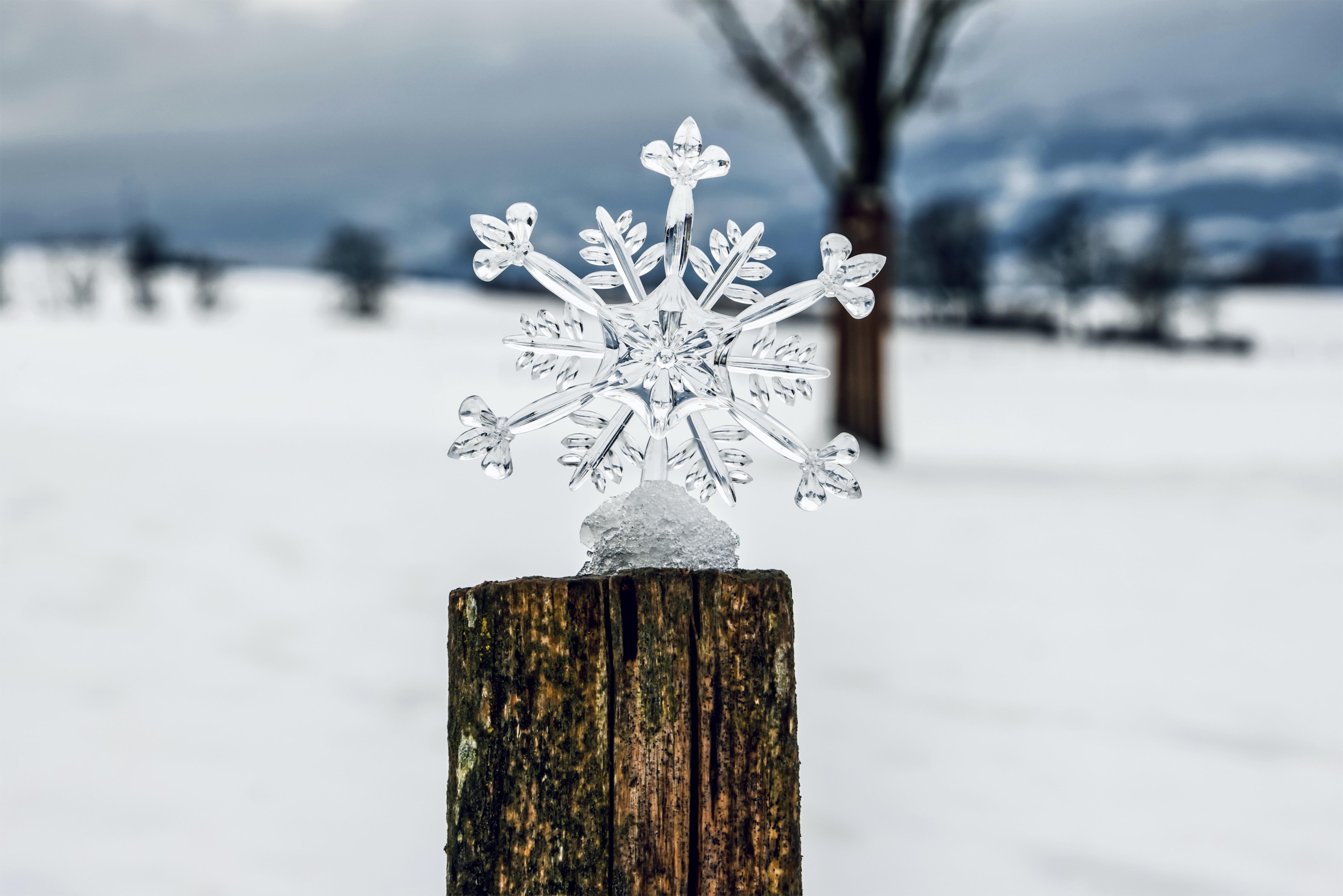 Фото боке Лед Зима Природа снежинка Пень Размытый фон льда зимние Снежинки пне