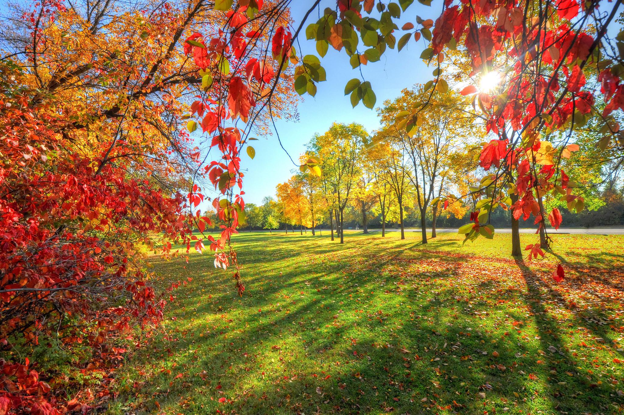 аллея из осенних деревьев скачать