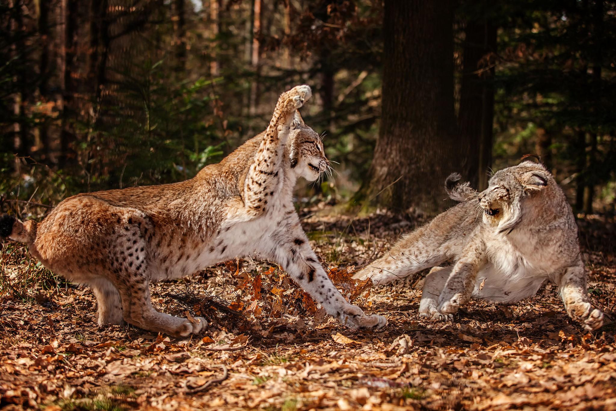 природа животные nature animals загрузить