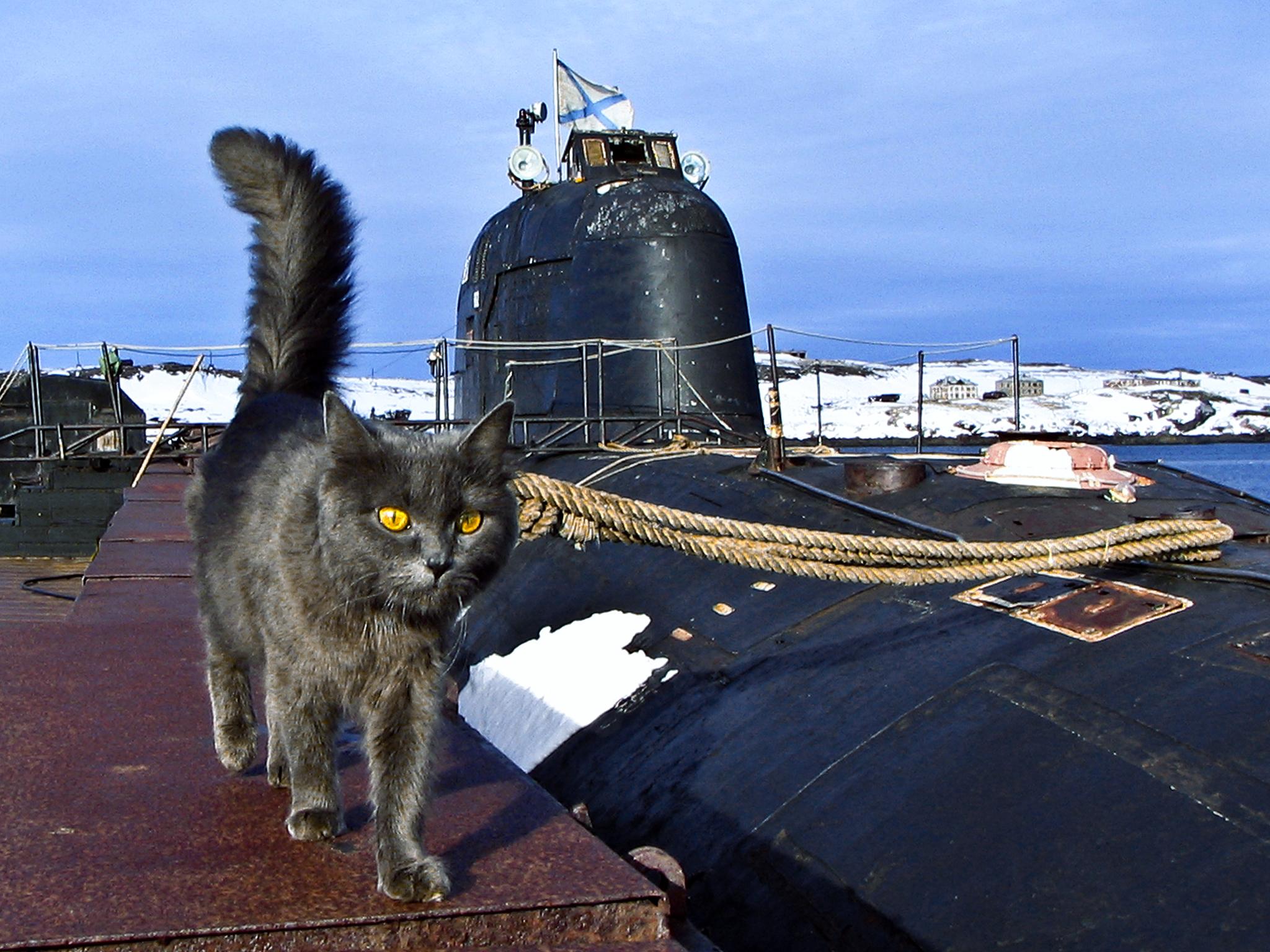 Коты на подводной лодке