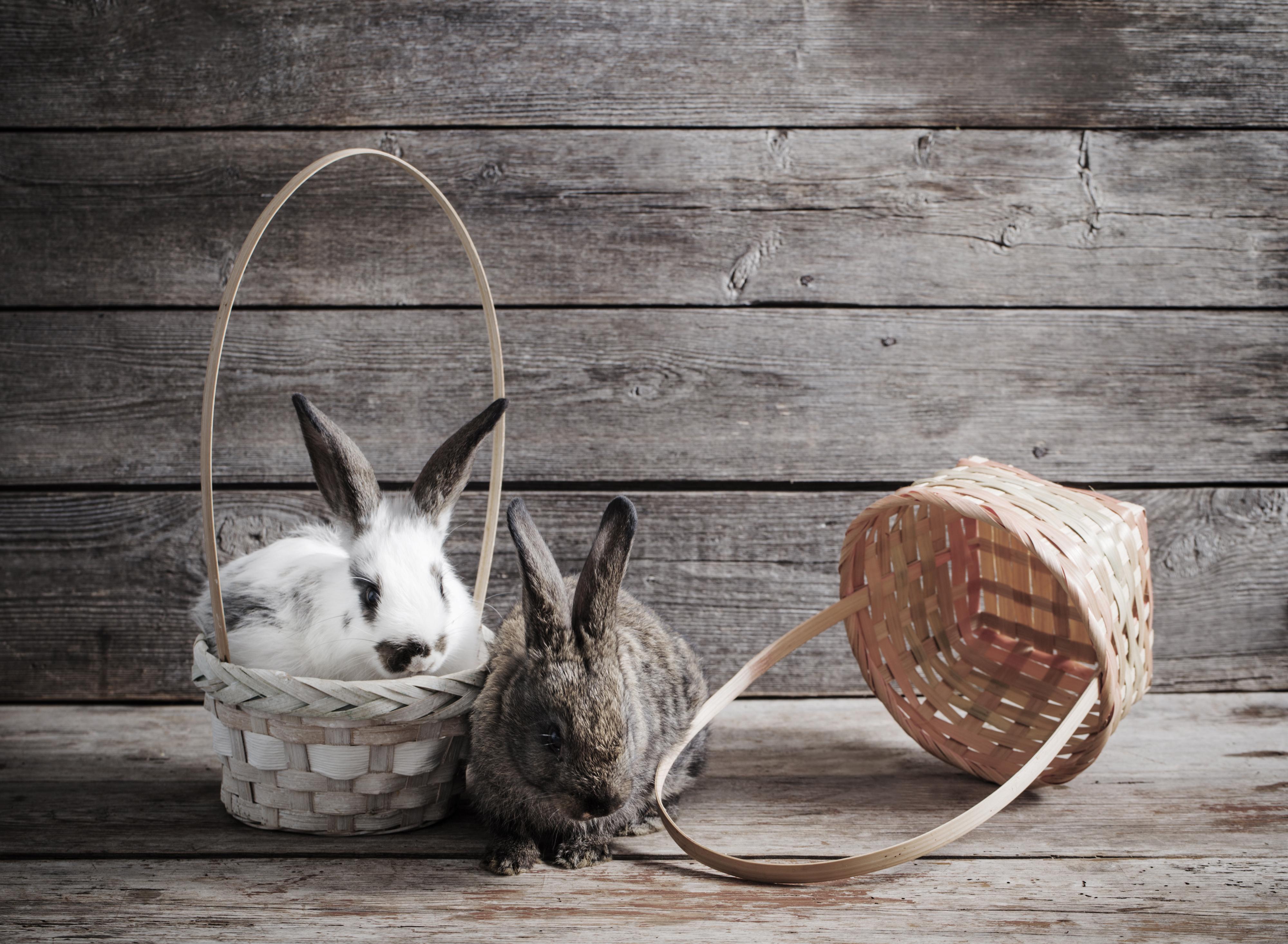 Фото Кролики две Корзина Стена животное Доски кролик 2 два Двое вдвоем корзины Корзинка стене стены стенка Животные