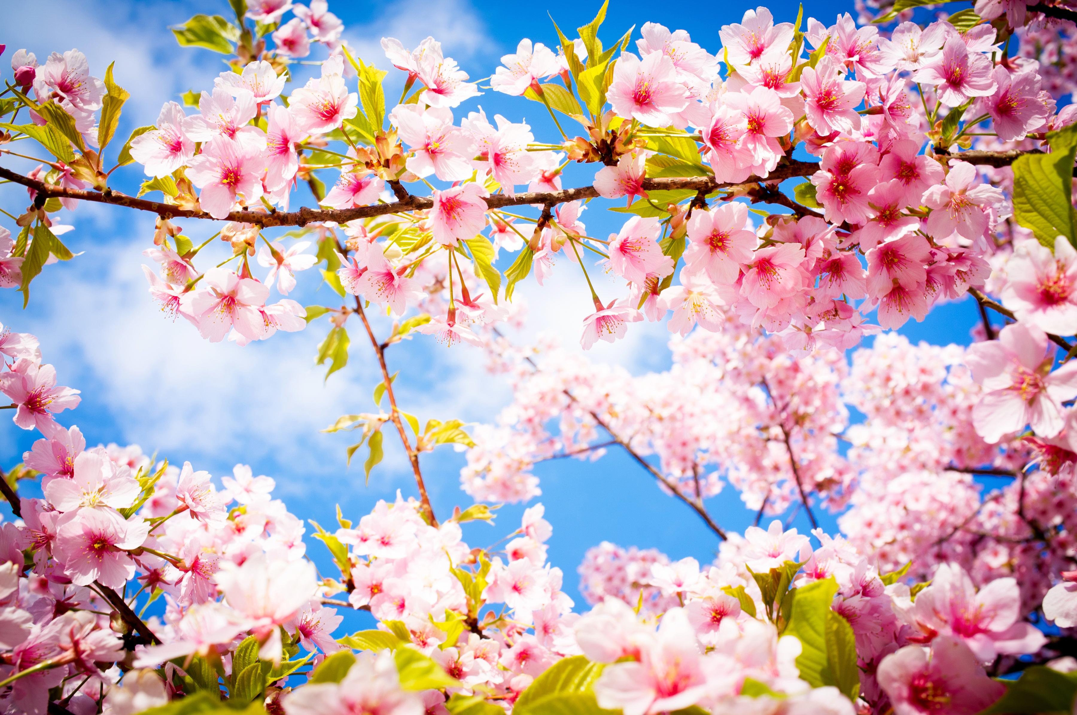 most beautiful flowers -