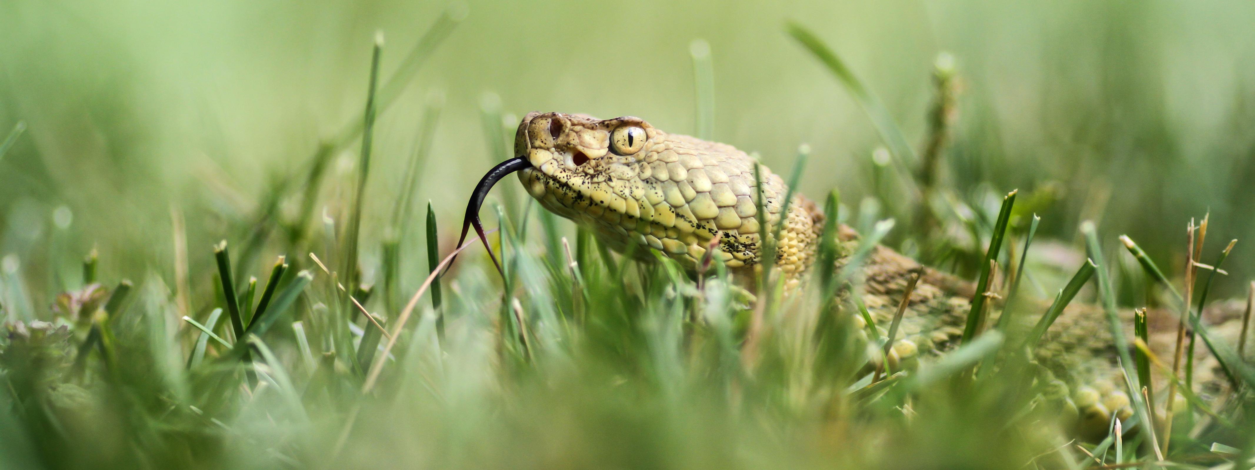 природа животные змея nature animals snake бесплатно