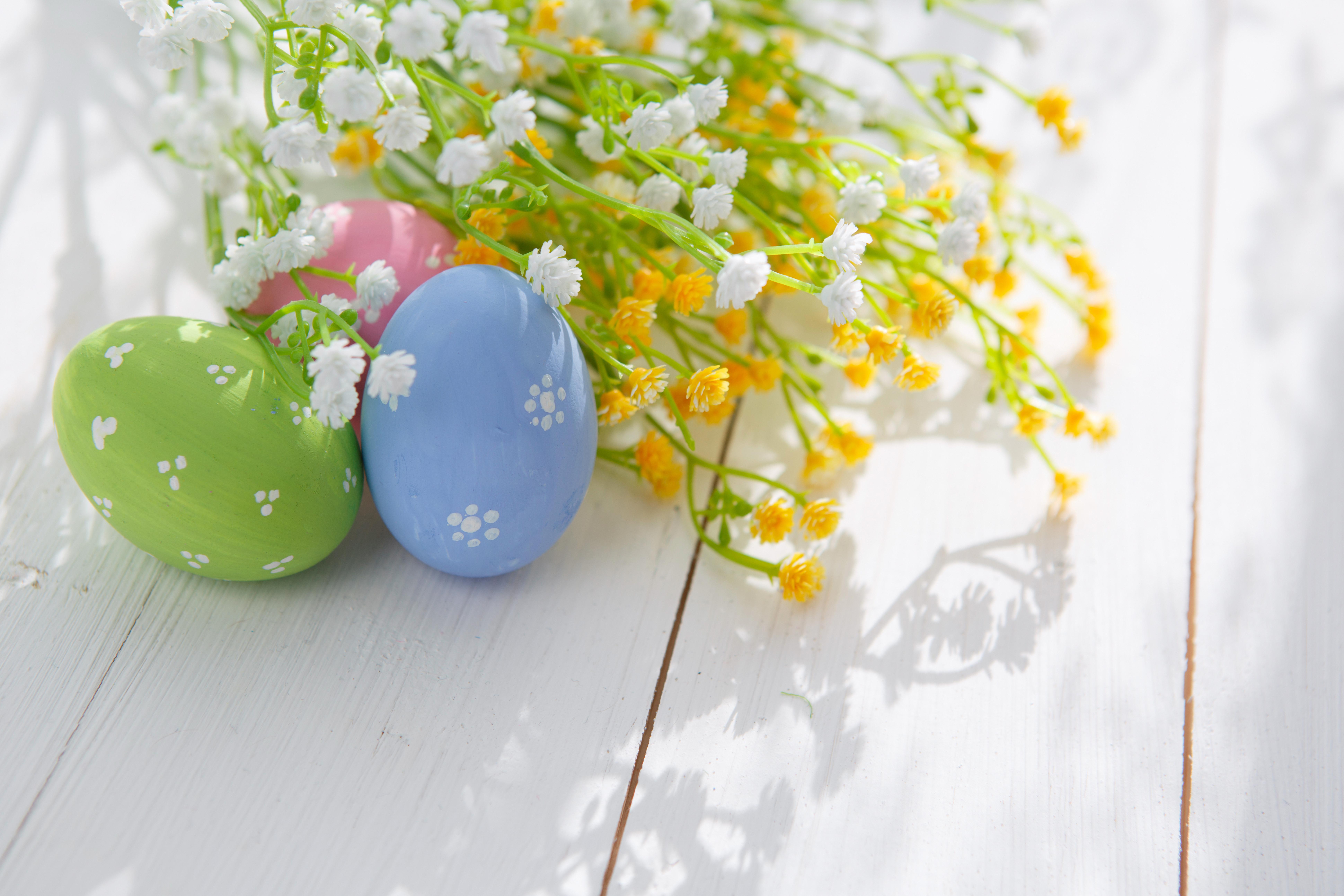 природа цветы яйца праздники яйца бесплатно