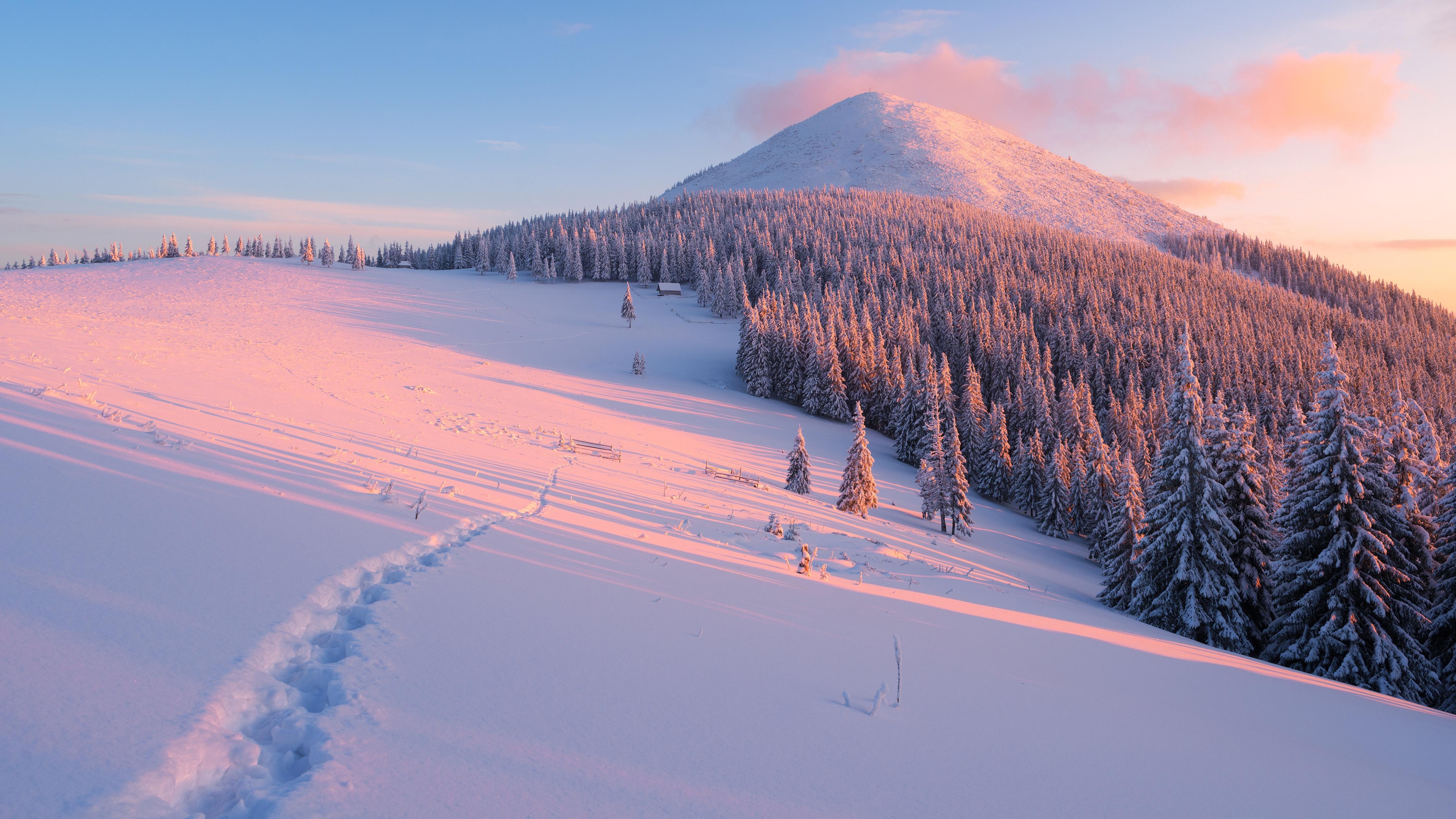 ели горы снег зима ate mountains snow winter бесплатно