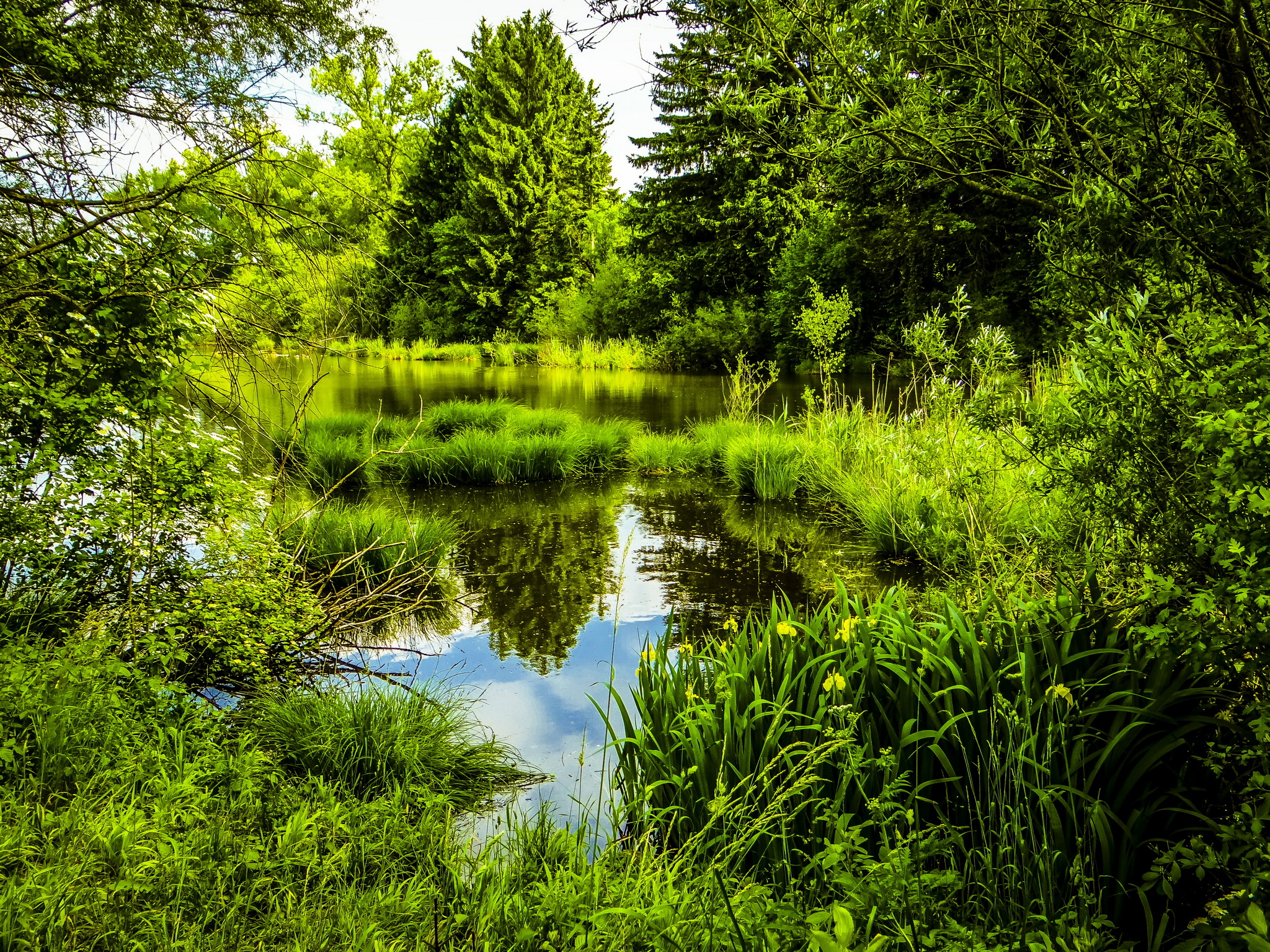природа трава река цветы деревья парк nature grass river flowers trees Park бесплатно