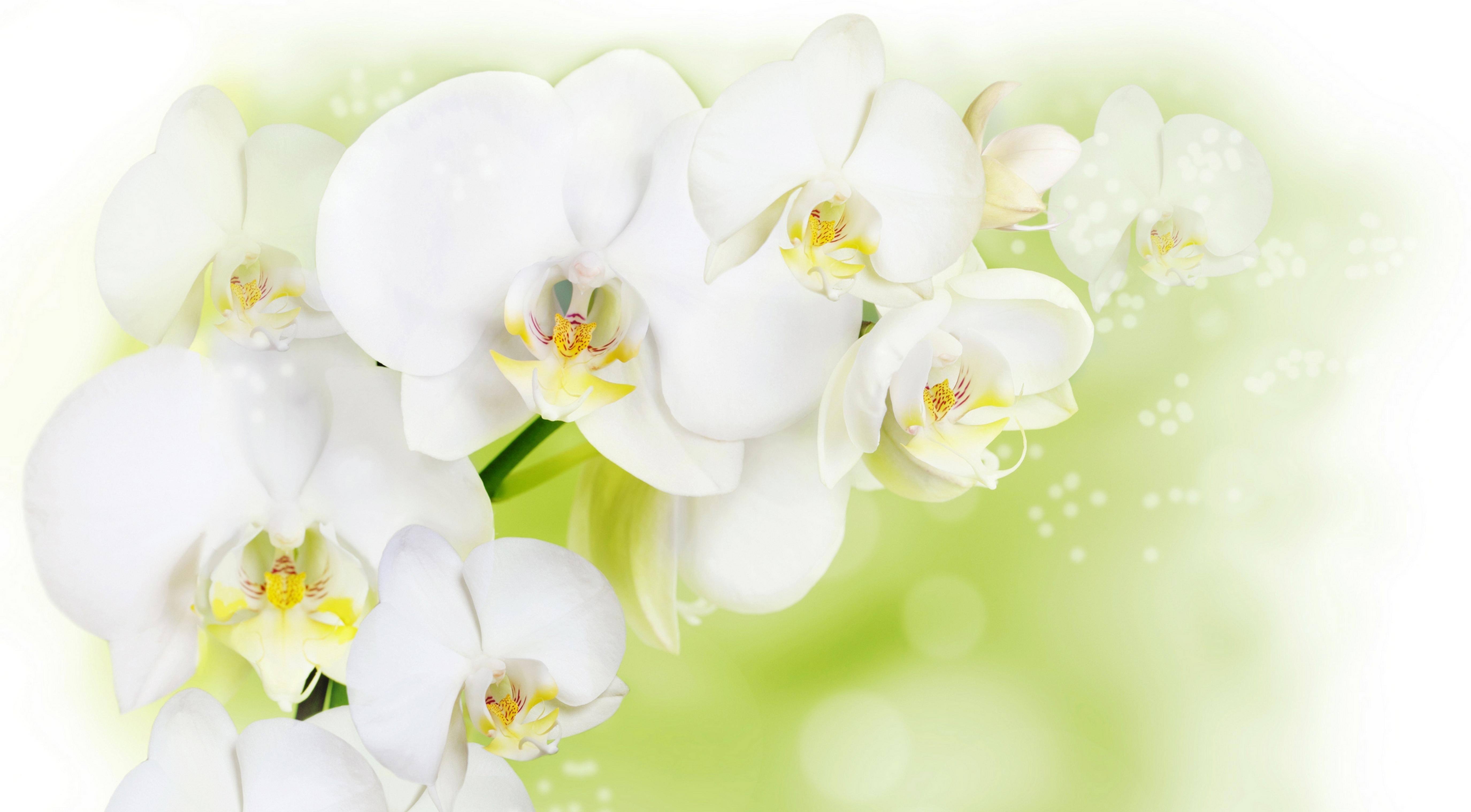 белый цветочек загрузить