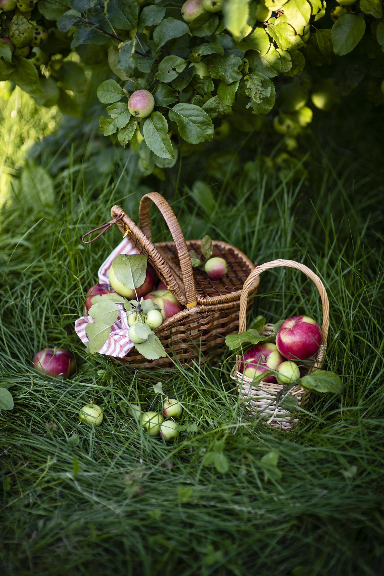 Фотографии Яблоки корзины Пища траве  для мобильного телефона Корзина Корзинка Еда Трава Продукты питания
