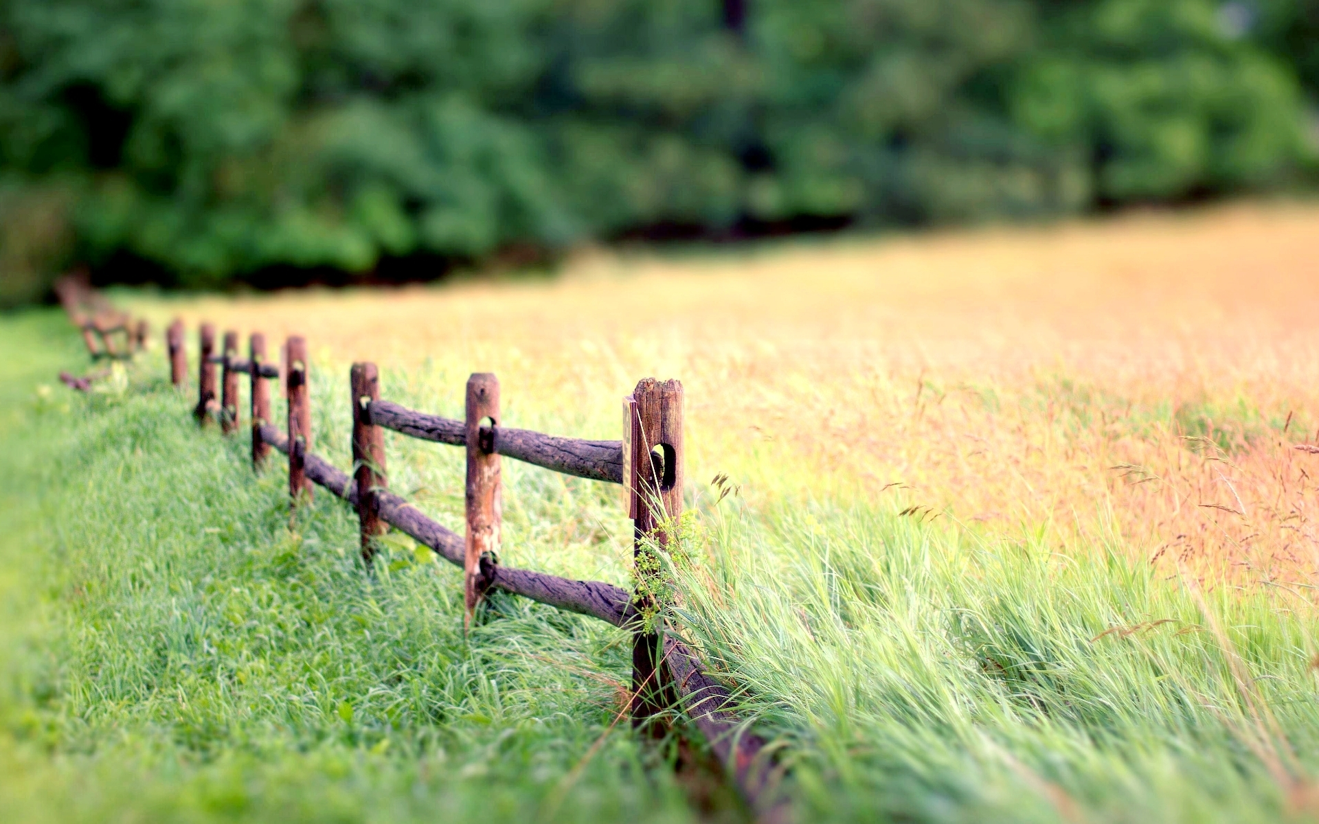 природа восход забор трава фокус бесплатно