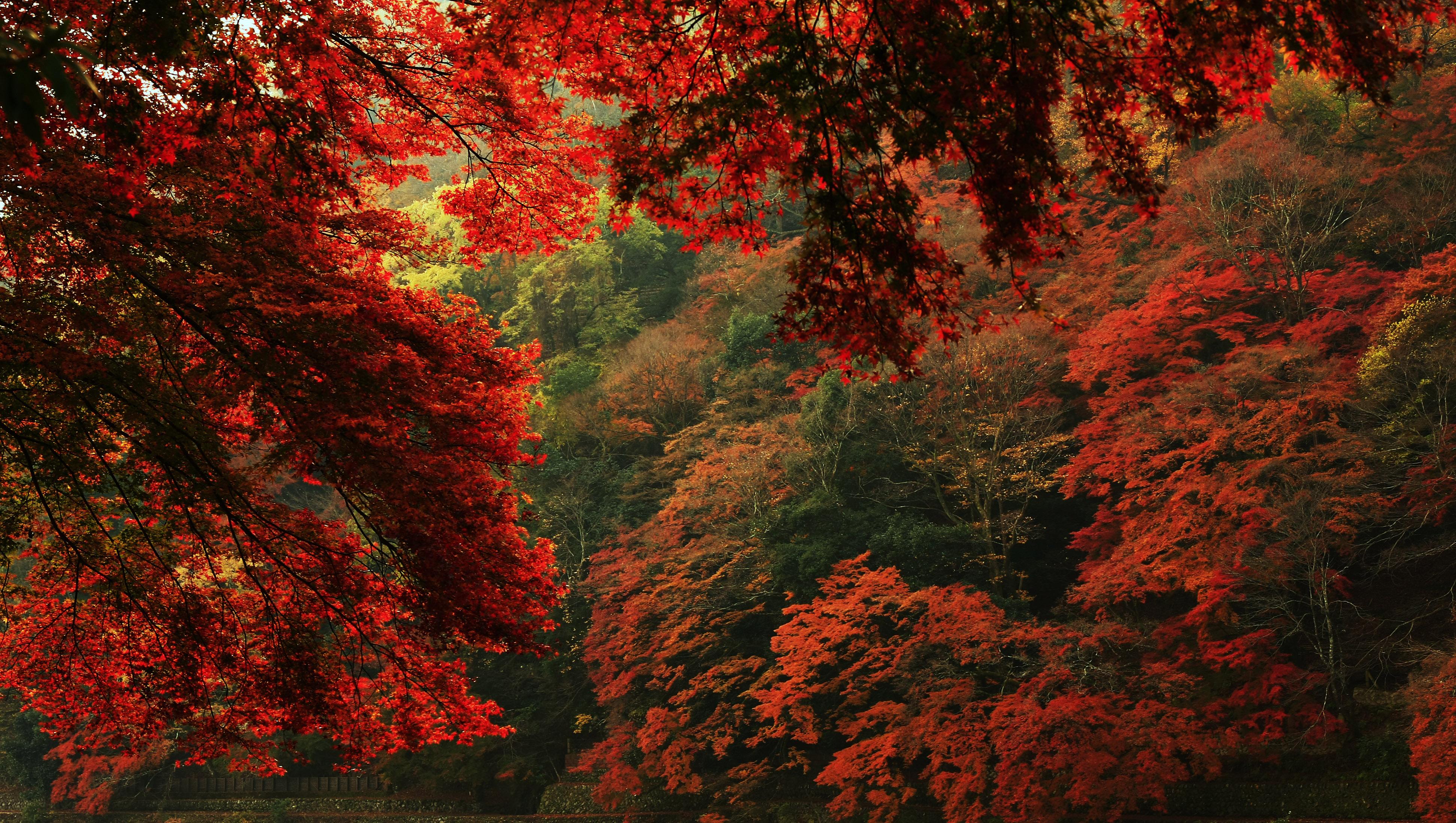природа деревья листья лес nature trees leaves forest бесплатно