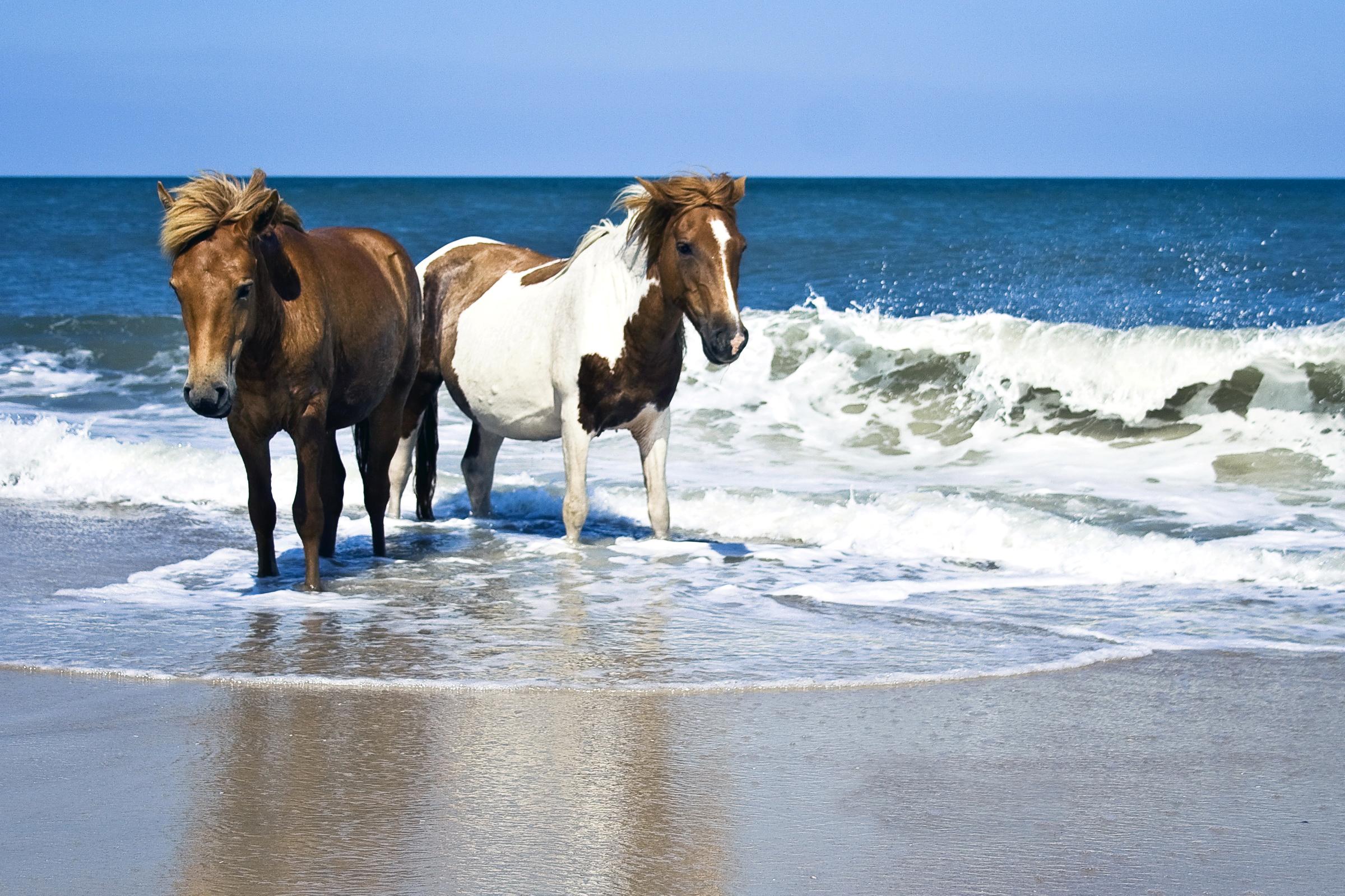Лошади пара у моря без смс
