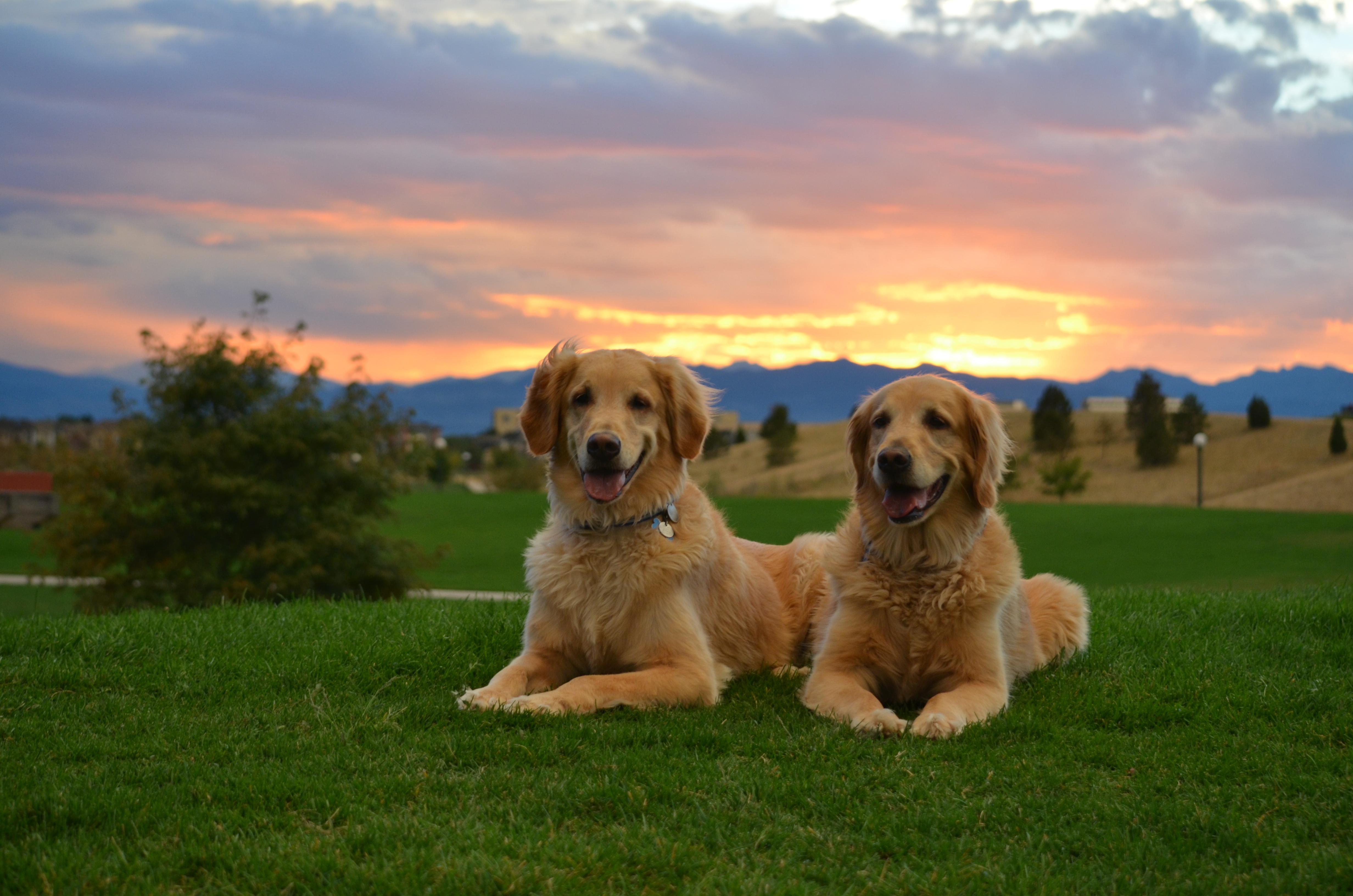 собака поле закат небо скачать