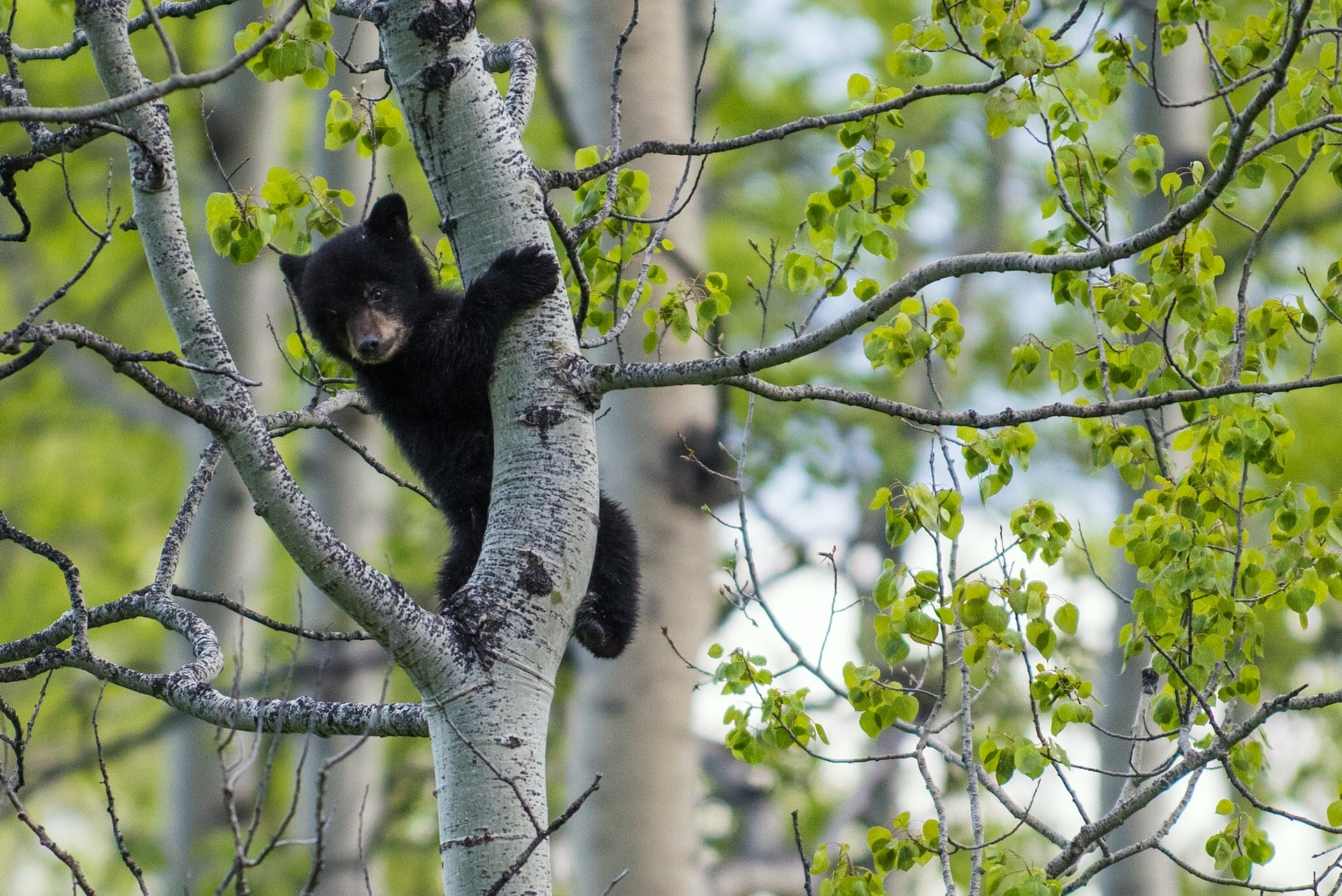 собака язык деревья березки загрузить