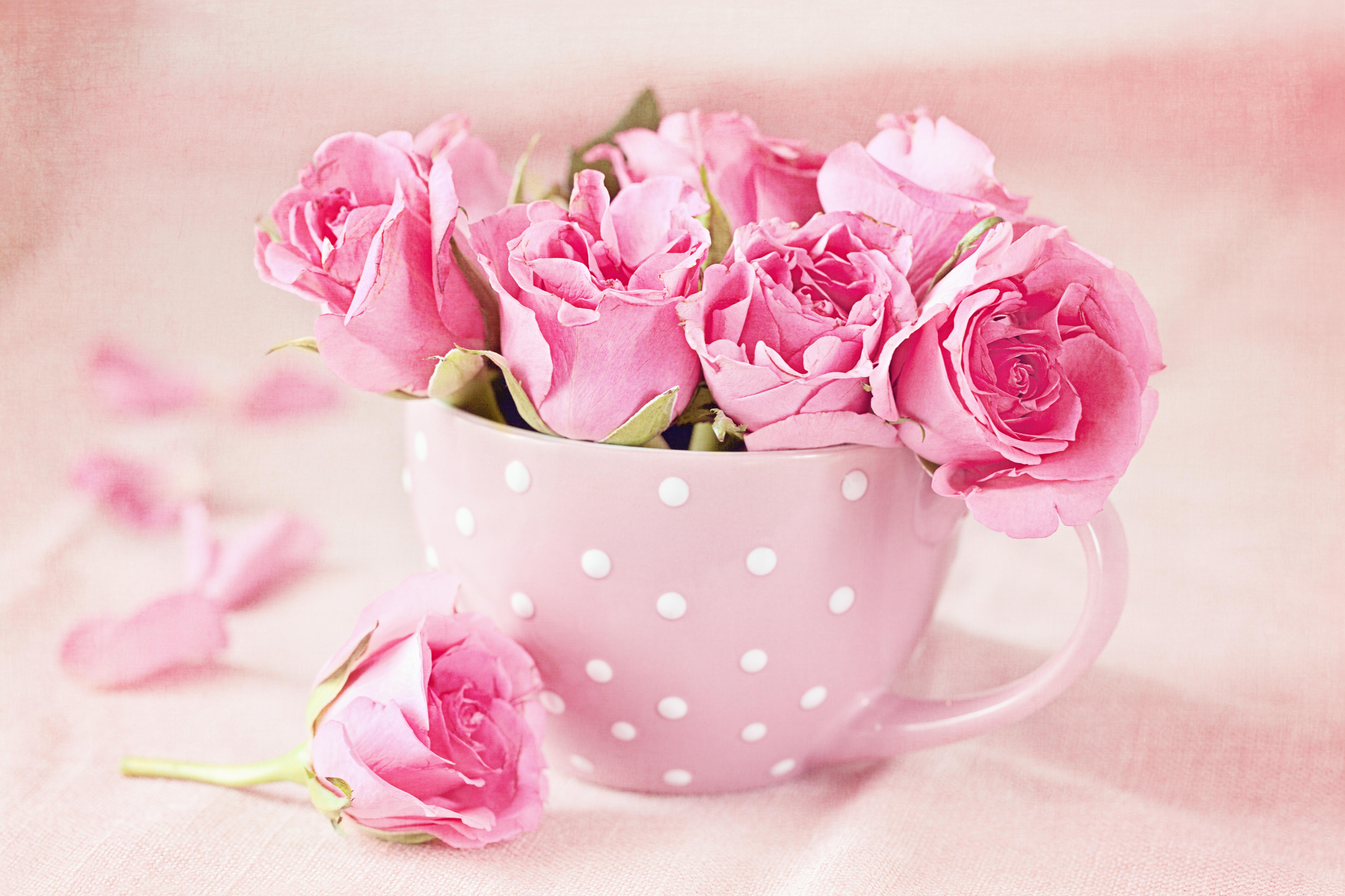 Очаровашка с розой скачать
