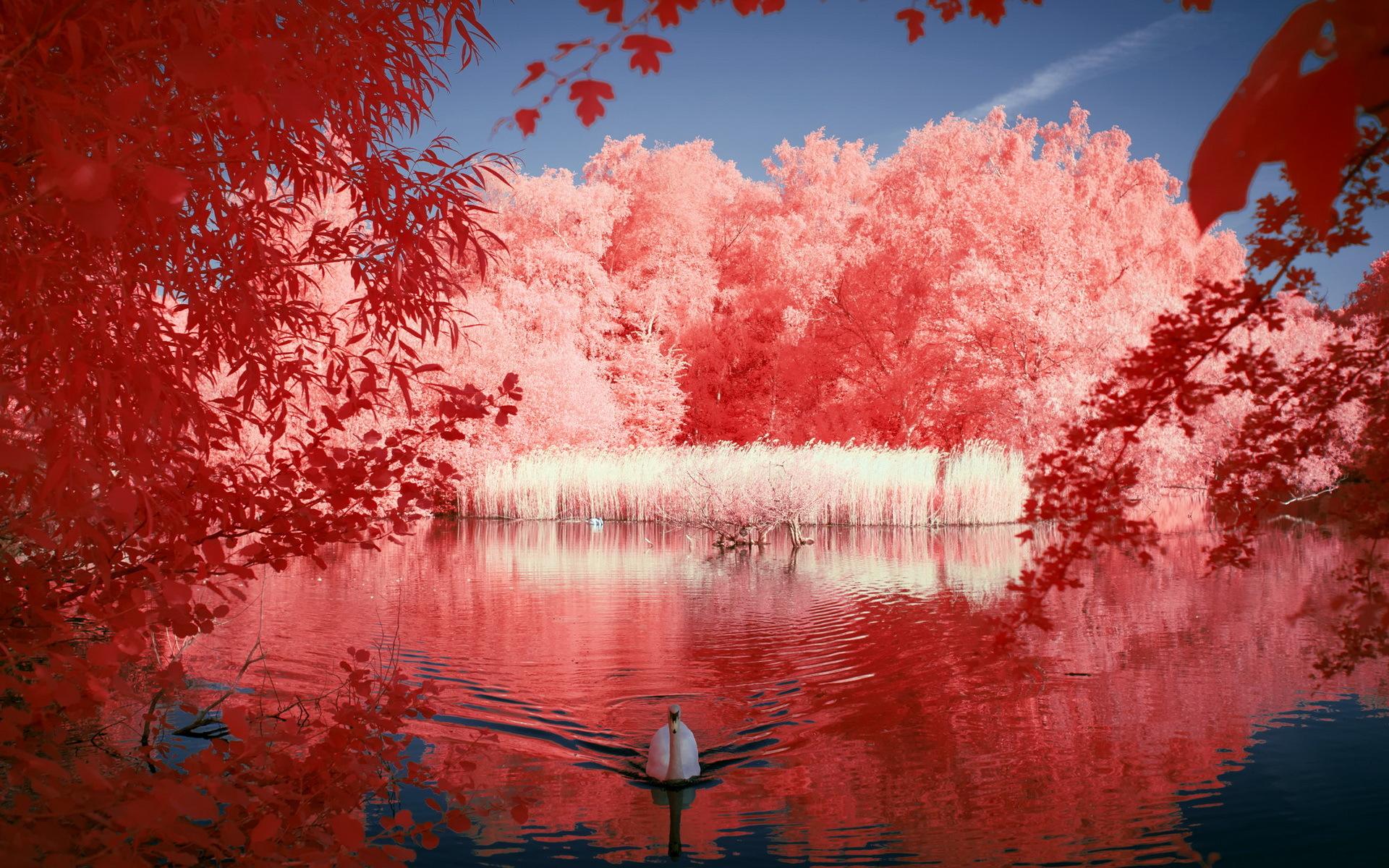природа река деревья облака лебедь животные без смс