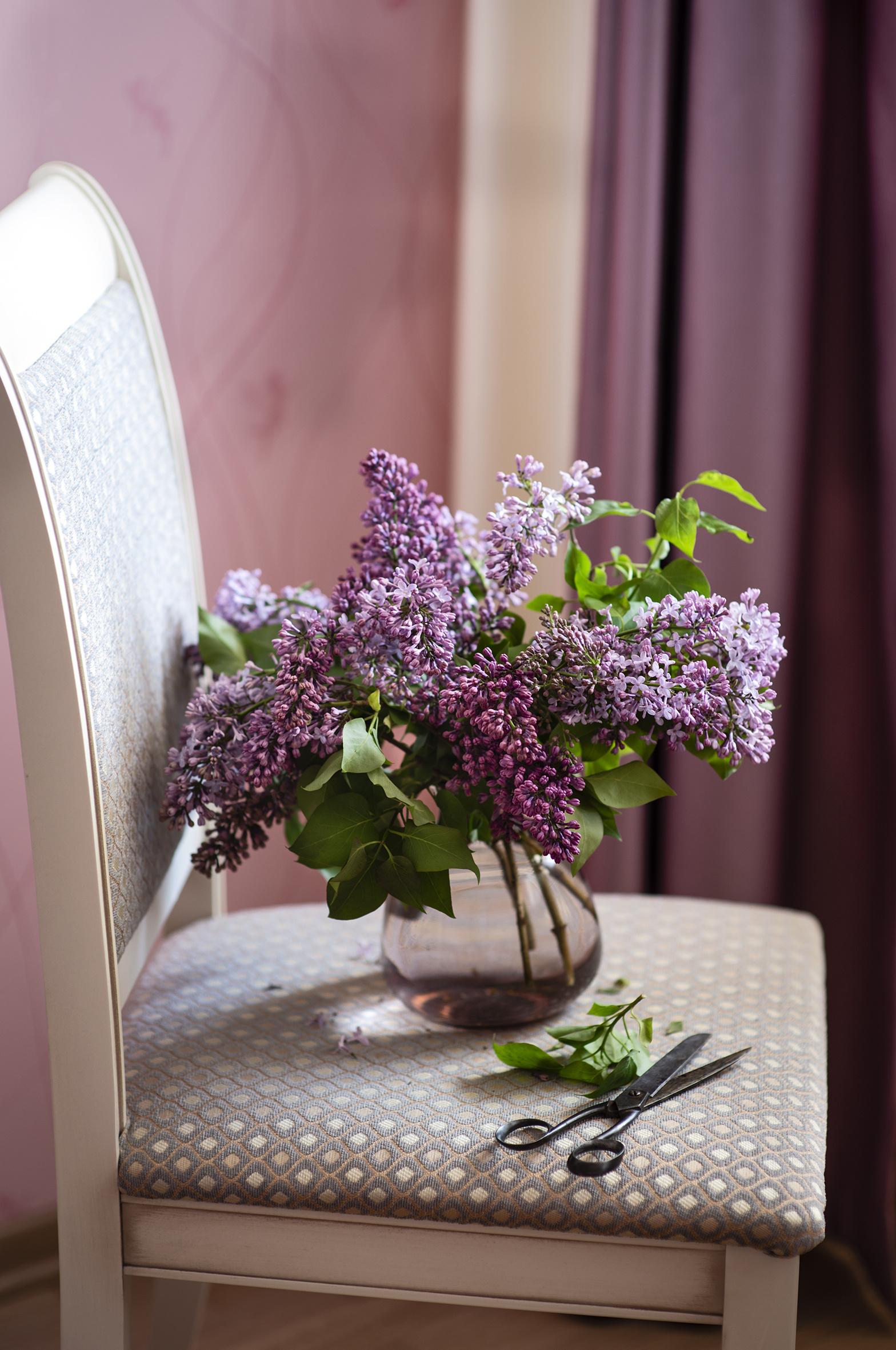 Фотографии Цветы Сирень вазе Стулья  для мобильного телефона цветок стул Ваза вазы