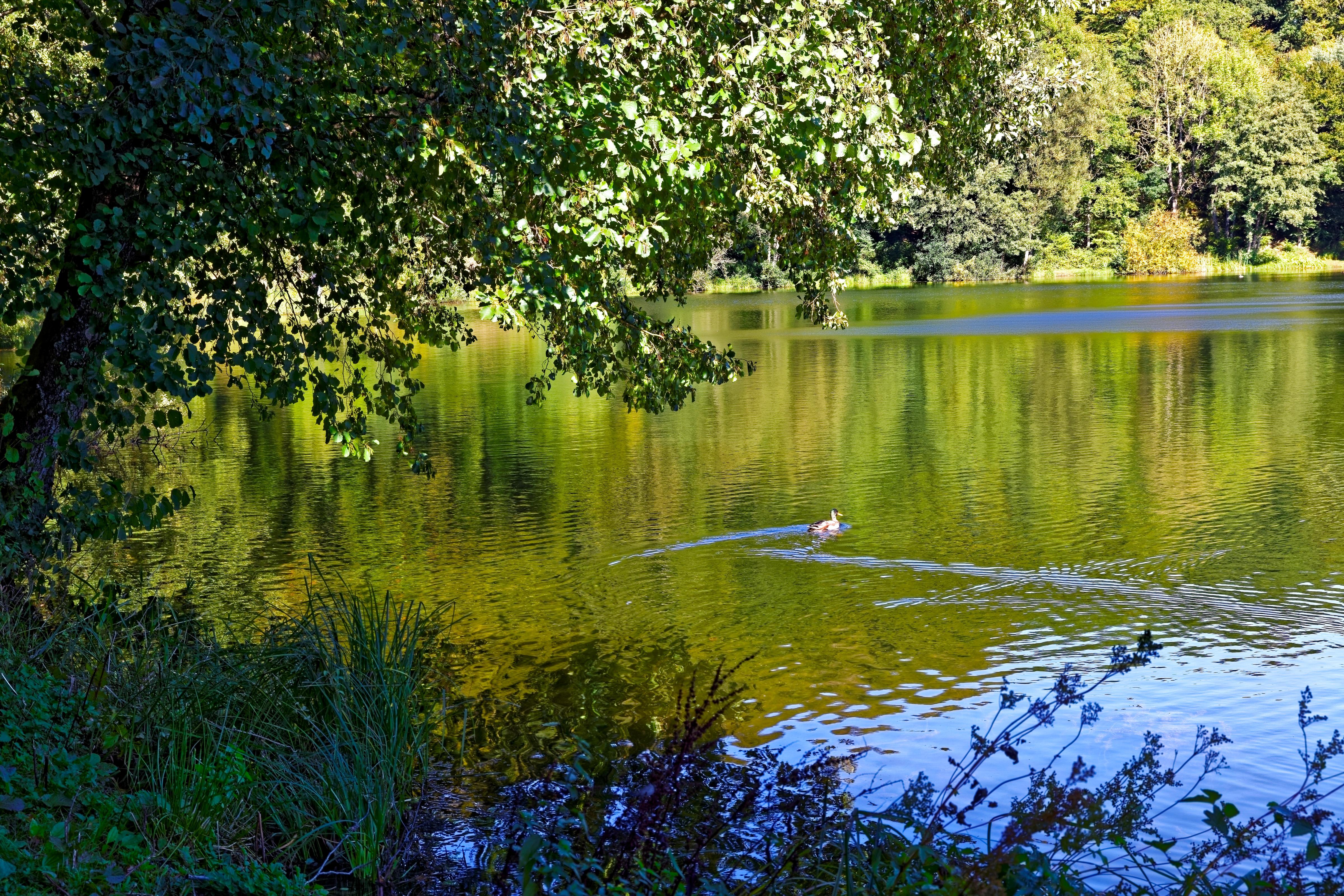 озеро зелень лето без смс