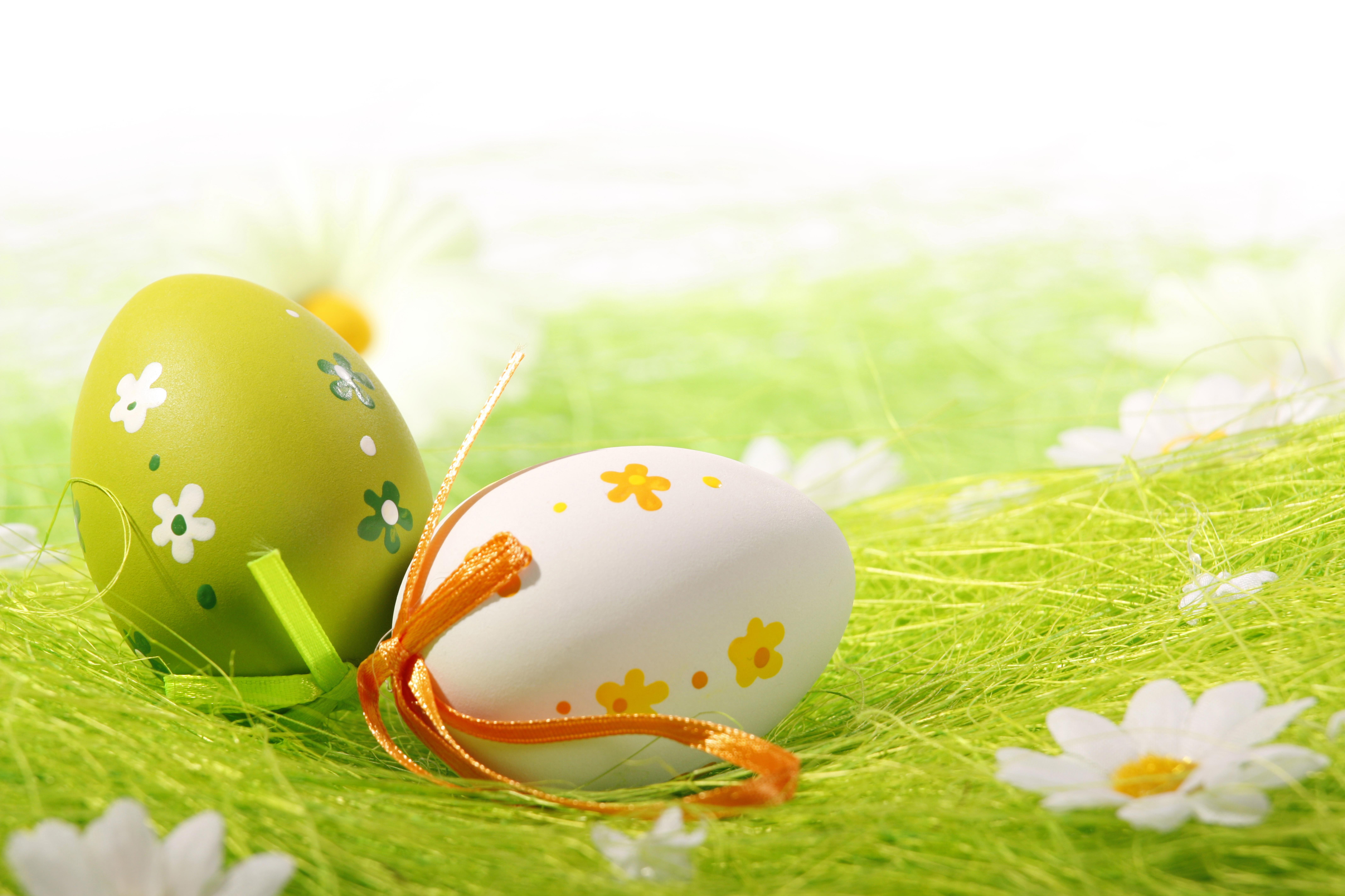 природа цветы яйца праздники яйца без смс