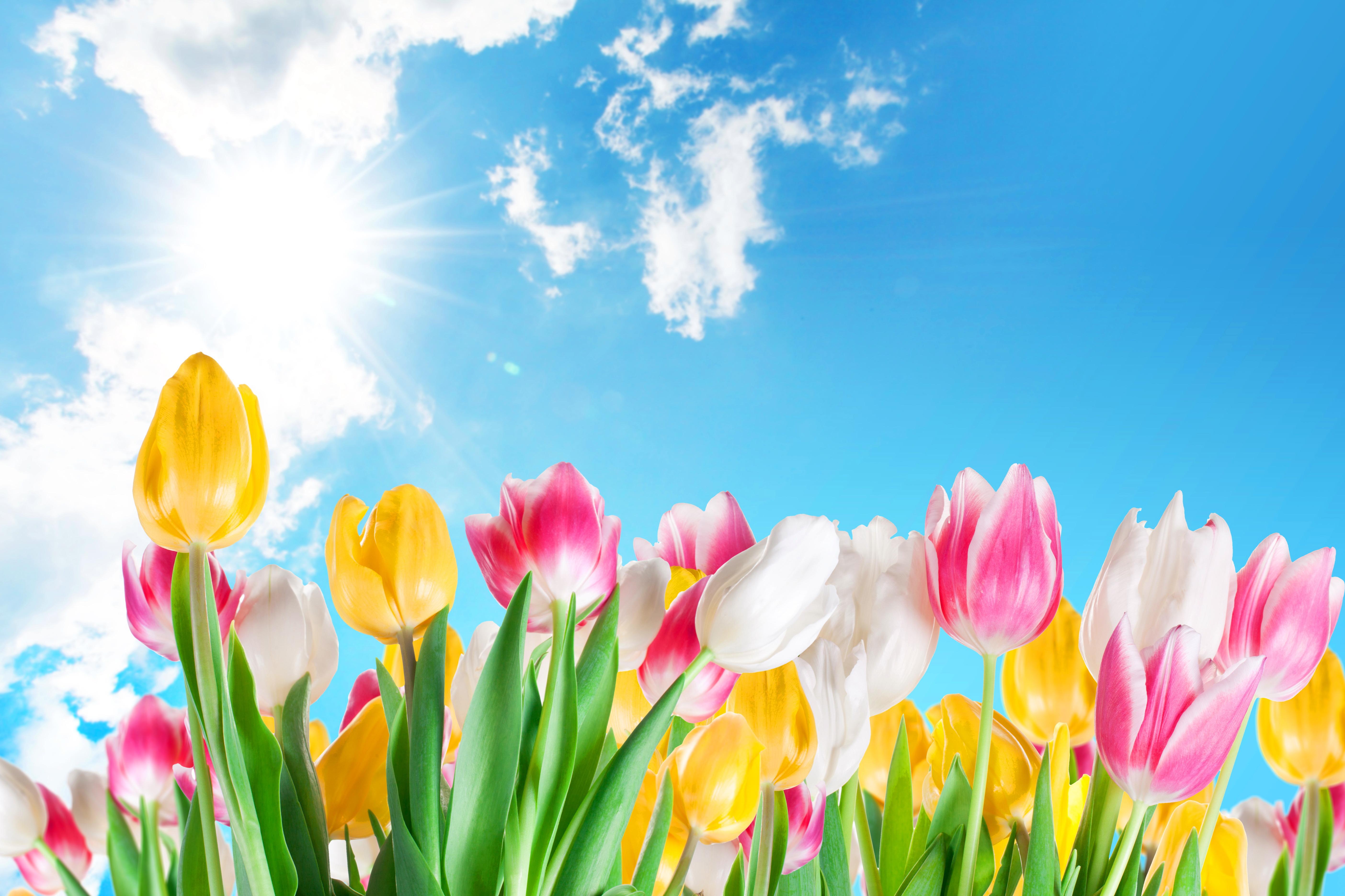 Небо и цветы