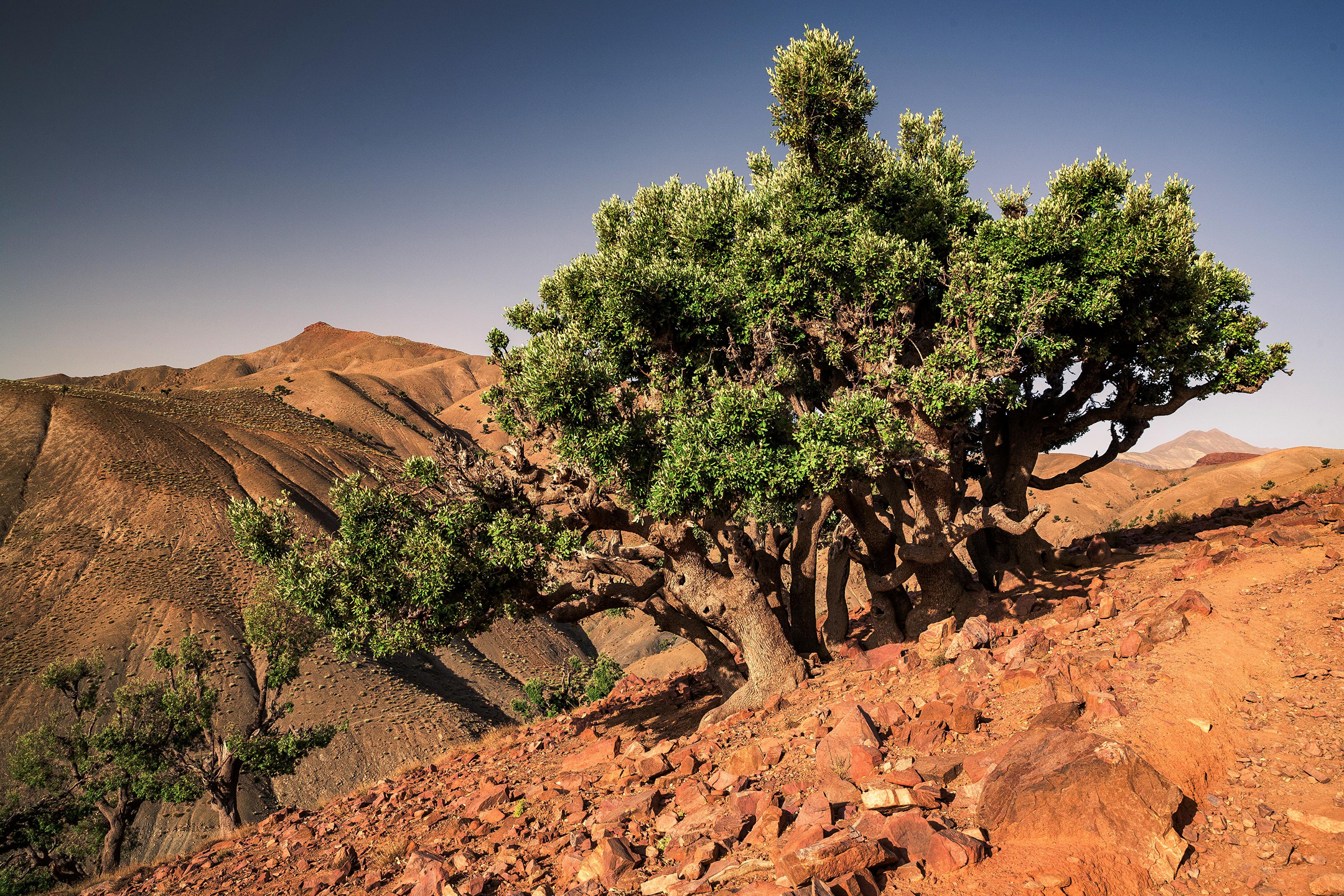Картинка Африка Марокко Toufrine, Tadla-Azilal Природа Камень дерева 3840x2560 Камни дерево Деревья деревьев