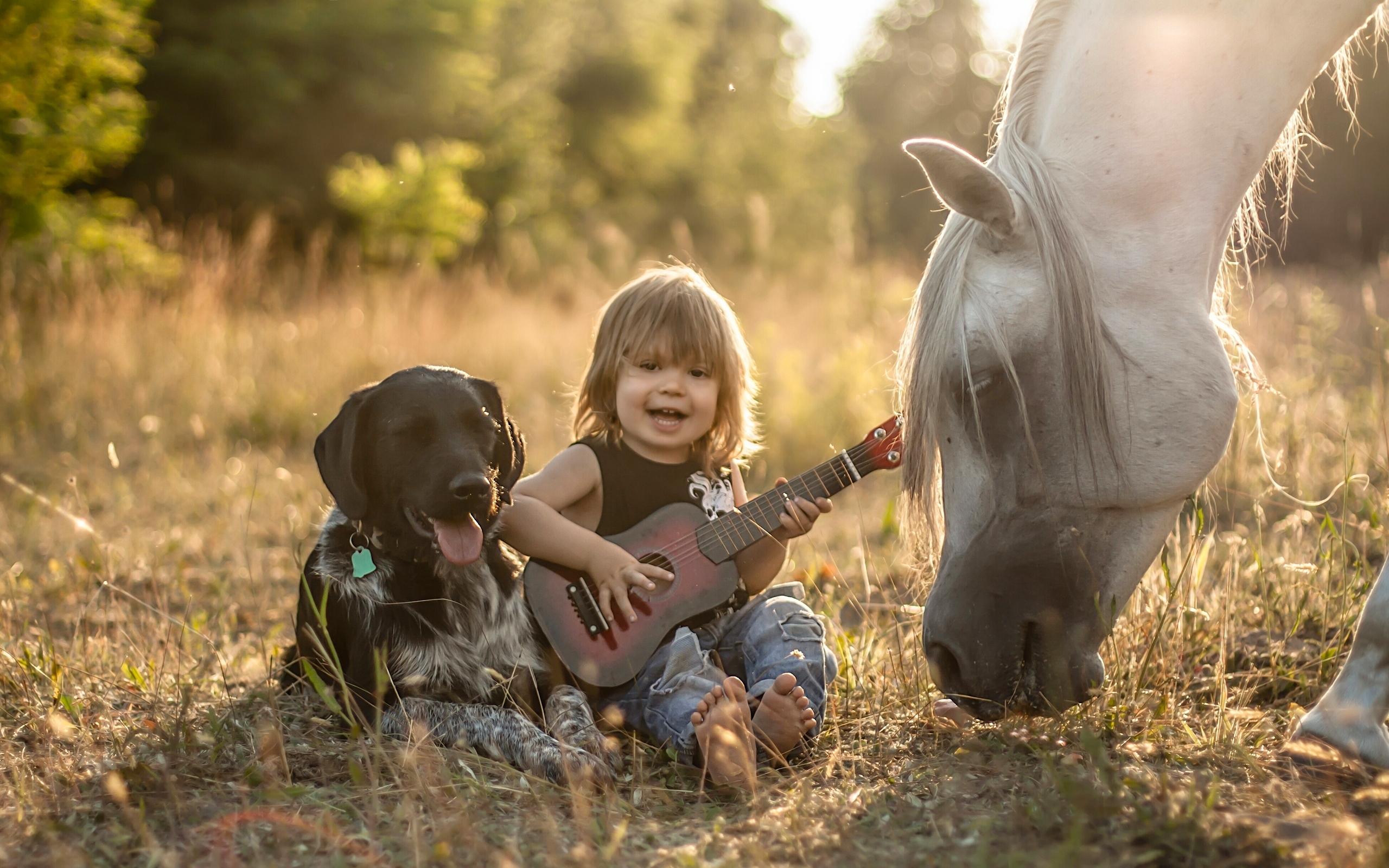 Картинка Ретривер Лошади Собаки Мальчики Гитара Ребёнок Животные Дети