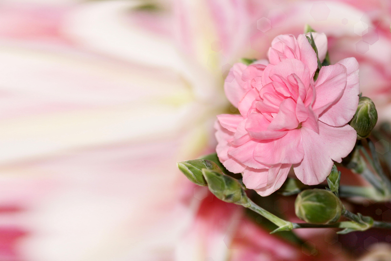 цветы ваза блики скачать