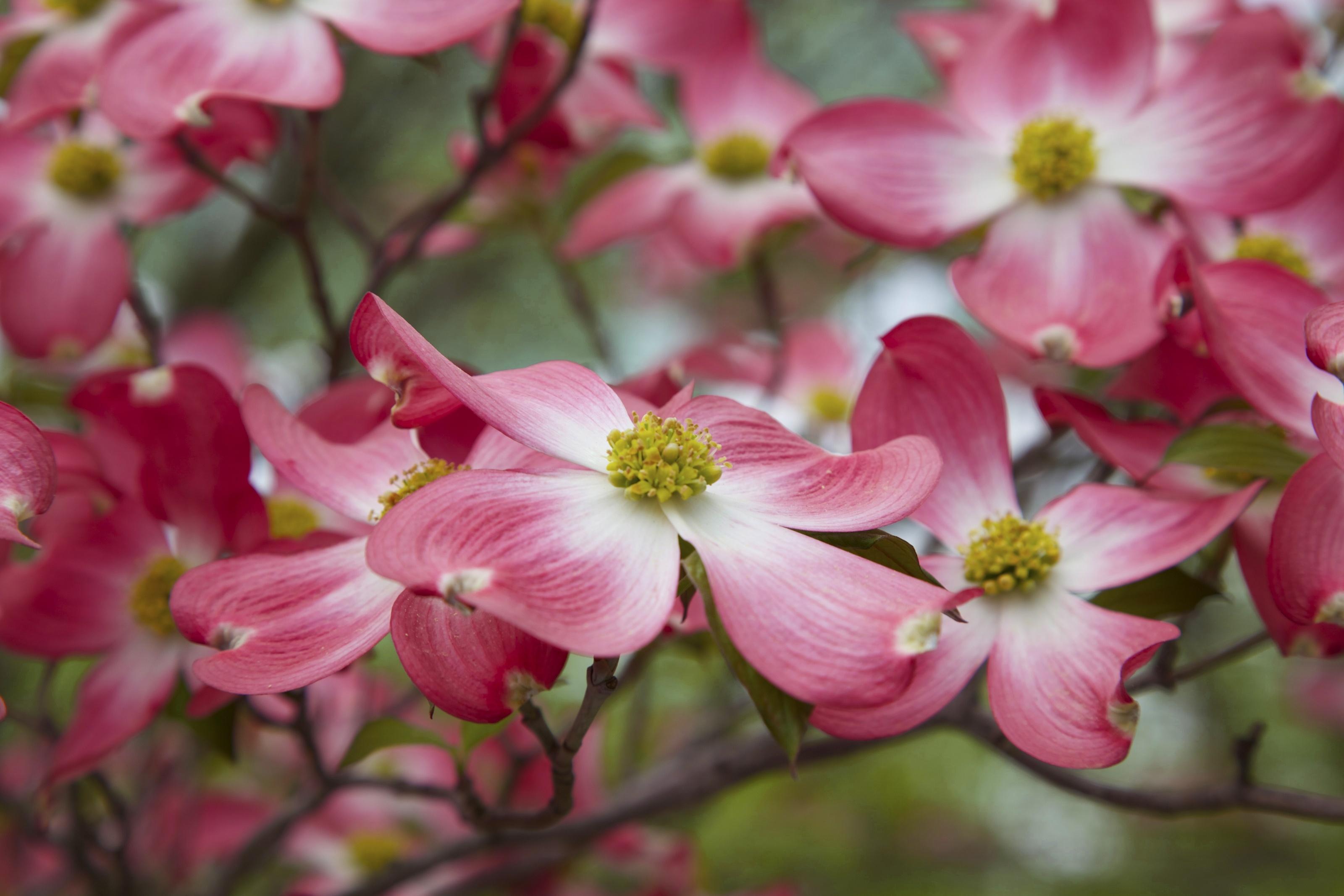 Розовые цветки во время цветения загрузить