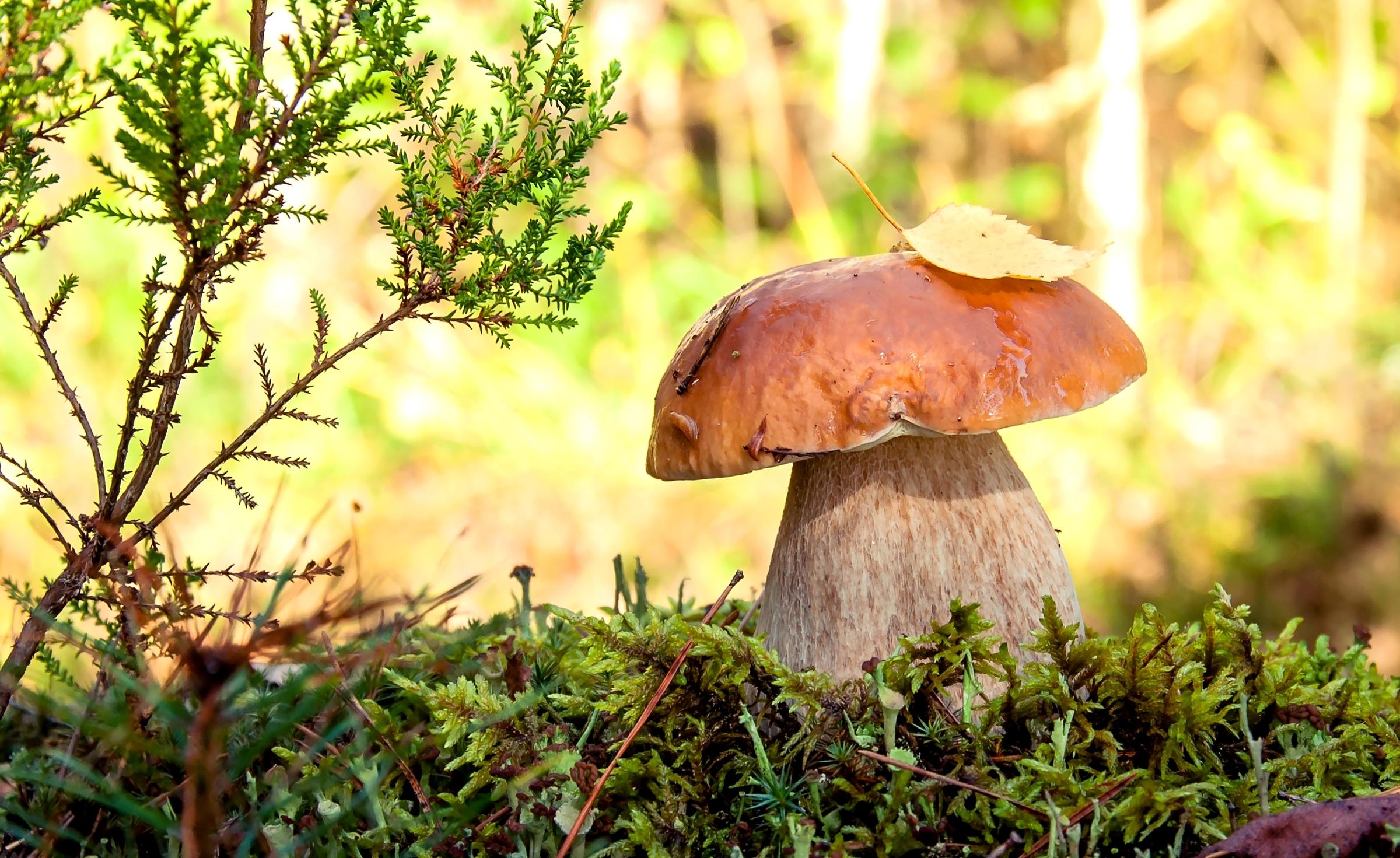 природа гриб загрузить