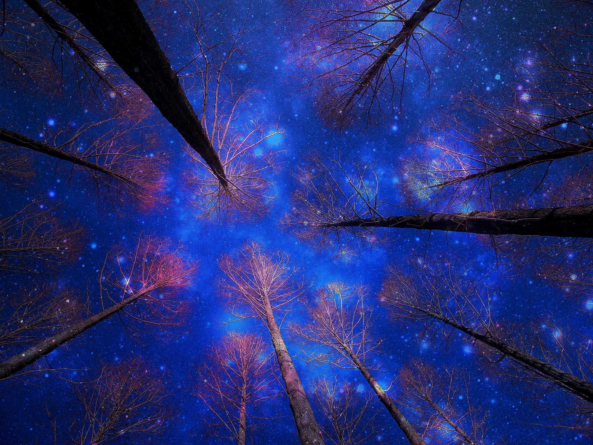 звезды лес кроны скачать
