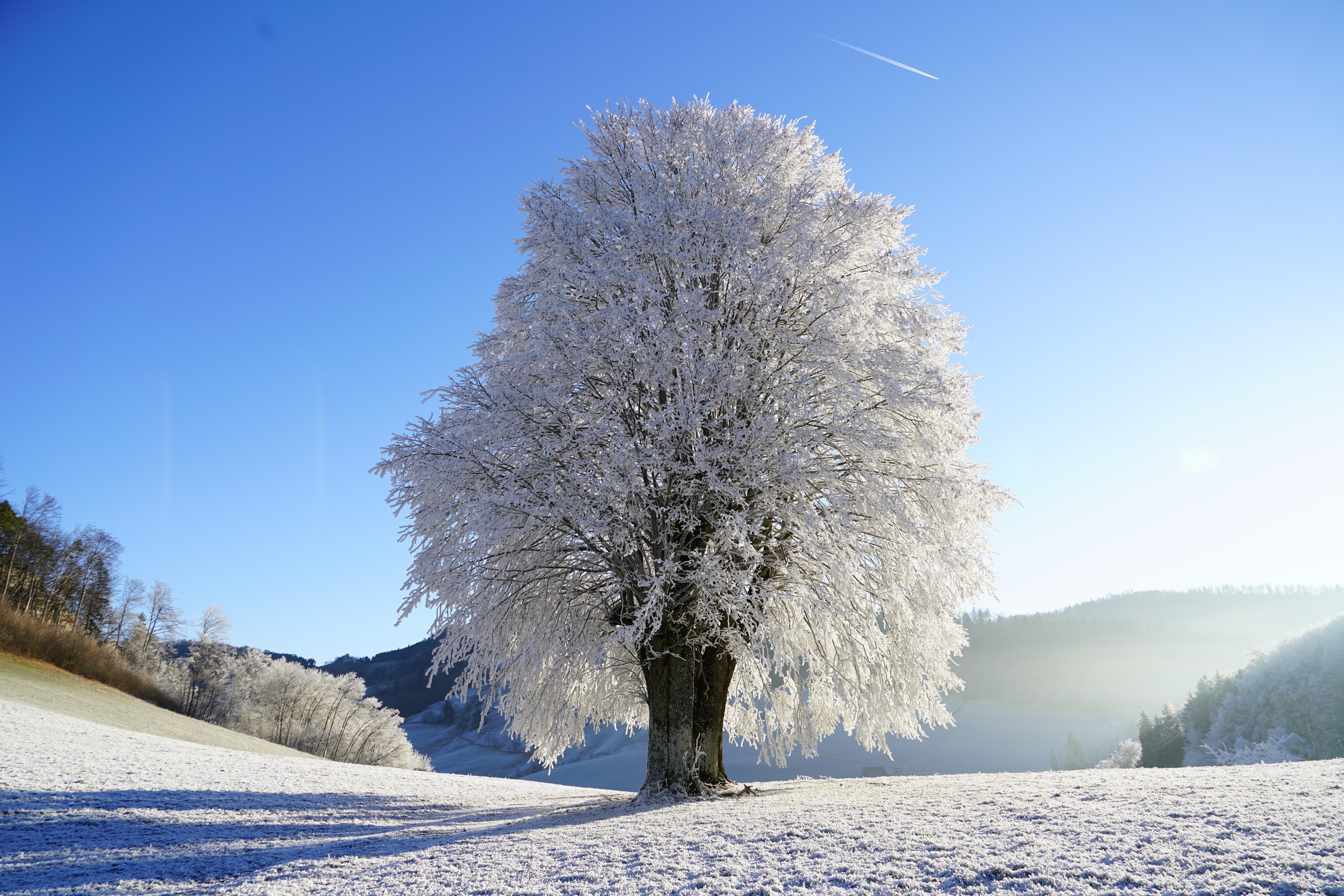 природа зима деревья загрузить